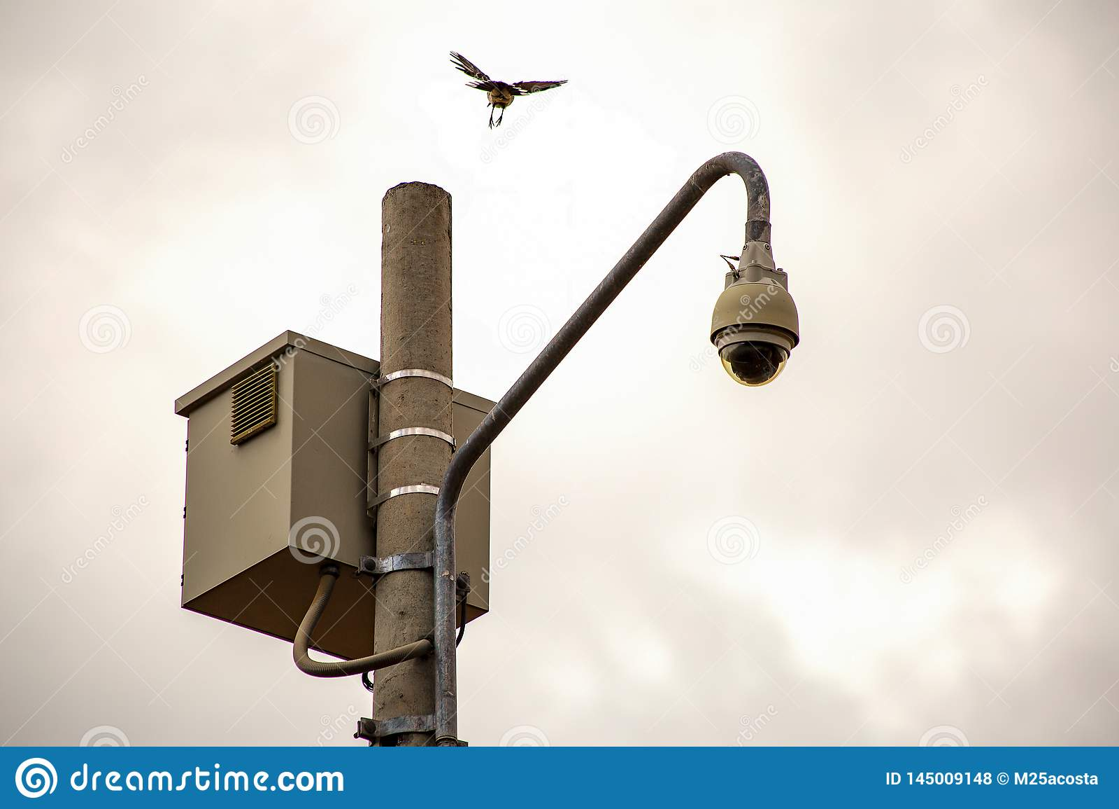 En fågel nära som ska landas på en stolpe med en säkerhetskamera