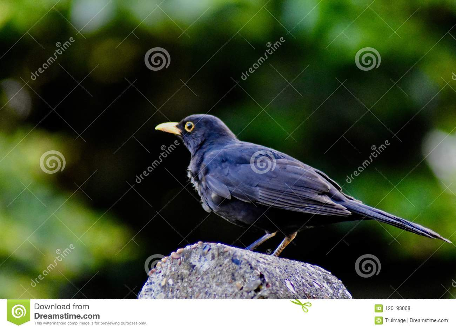 En fågel som sätta sig på ett trädgårds- staket