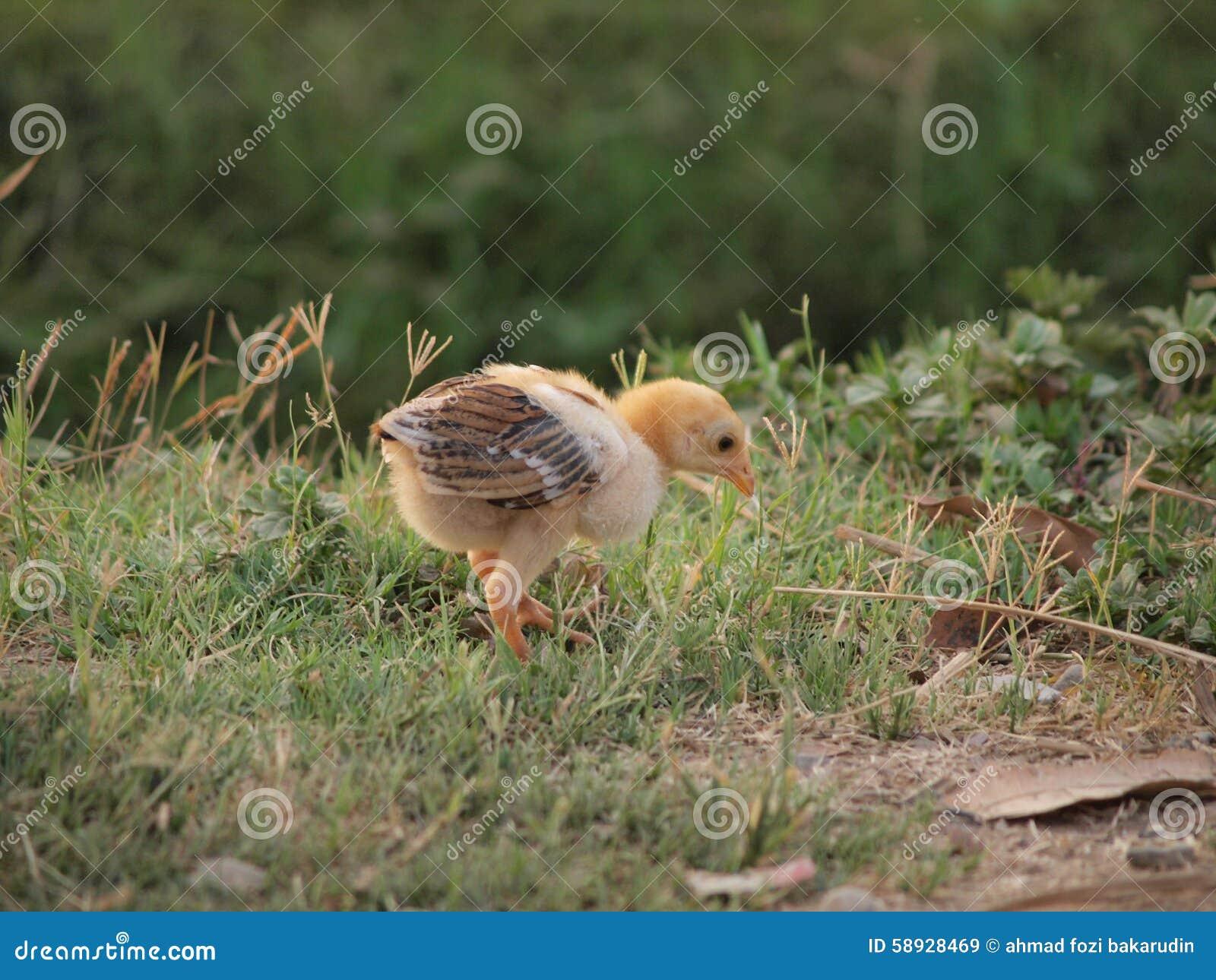 En fågelunge