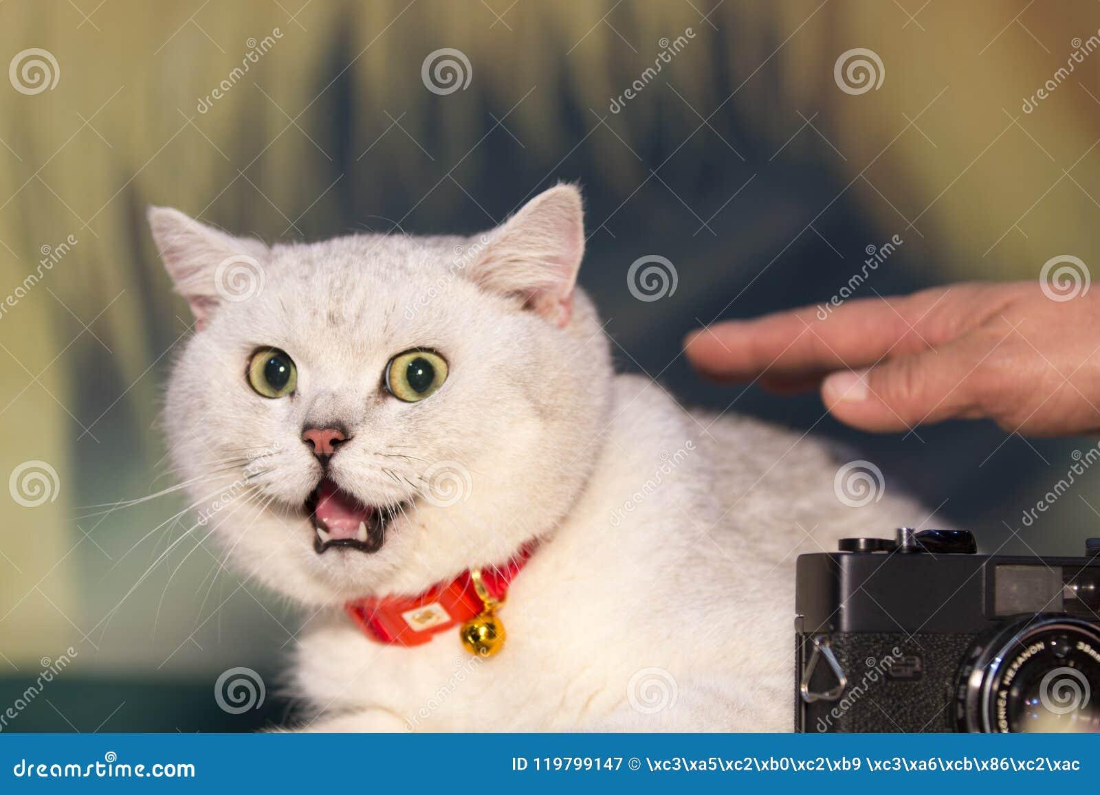 En fet katt med ett rikt uttryck