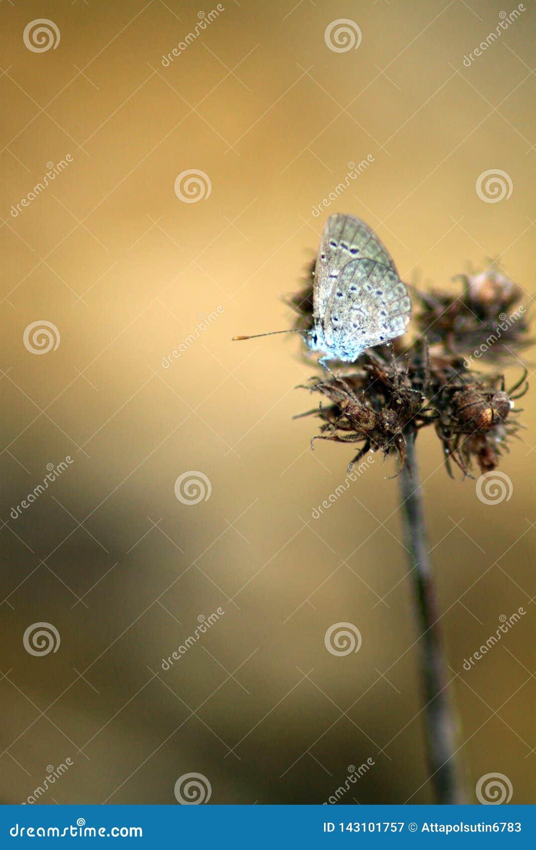 En fjäril på en blomma