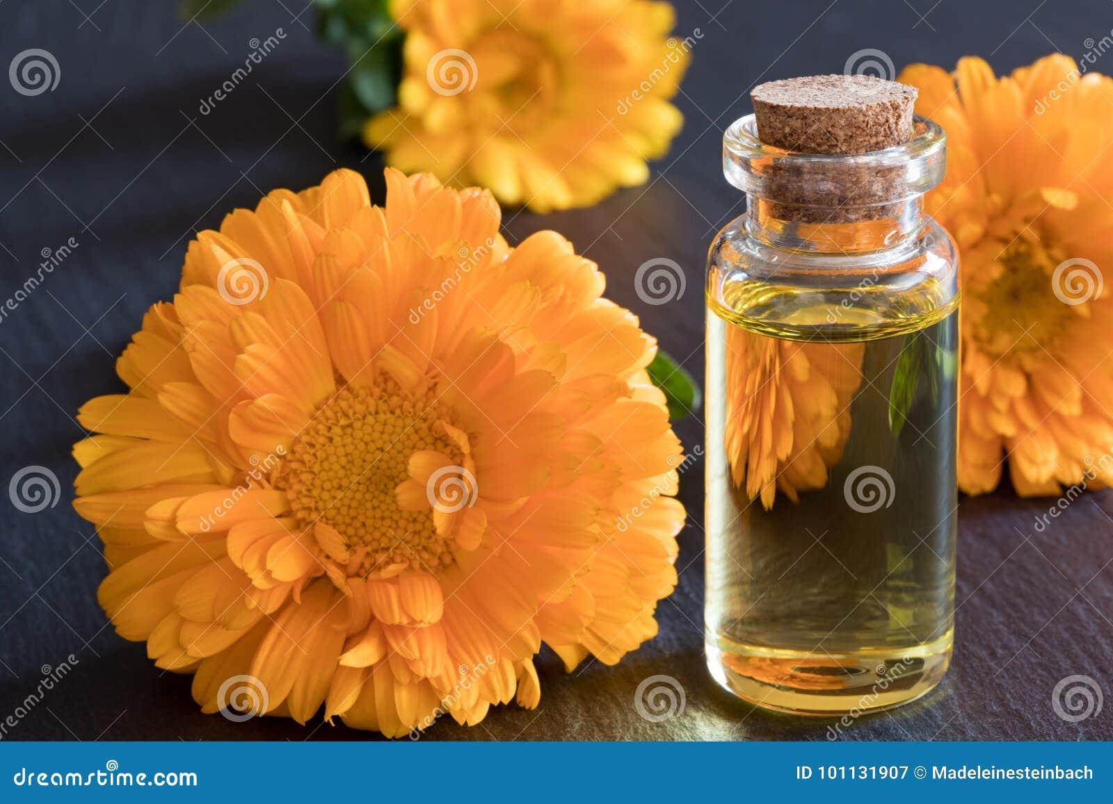 En flaska av nödvändig olja för calendula på en mörk bakgrund