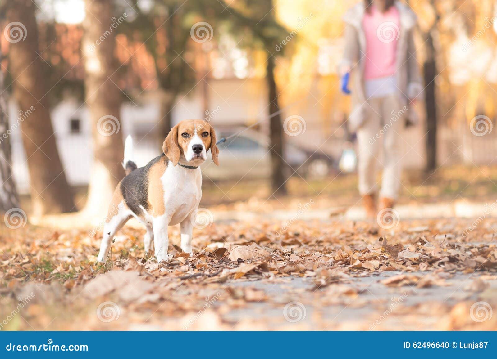 En flicka och hennes hund som går i en parkera