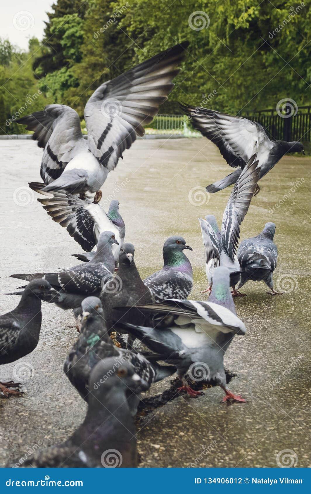 En flock av duvor i parkera