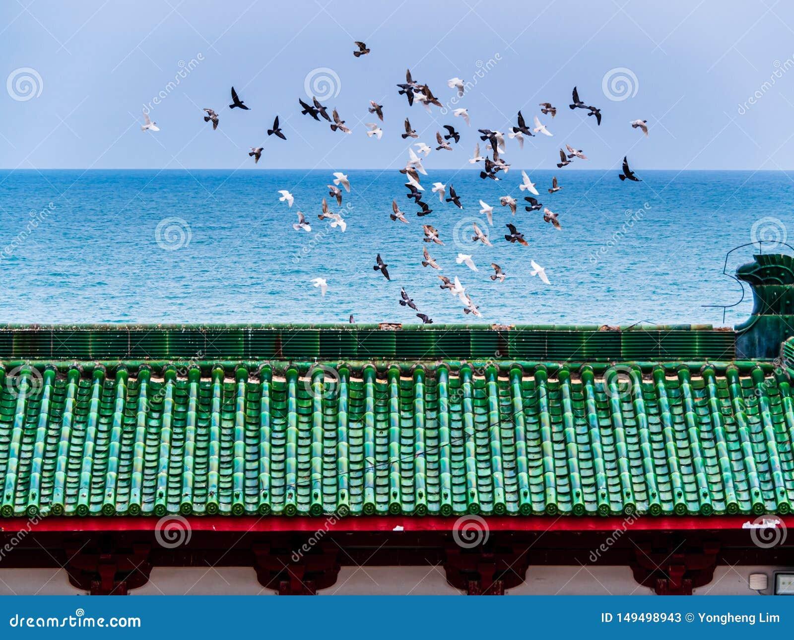 En flock av f?glar i flykten ovanf?r taket av en kinesisk tempel