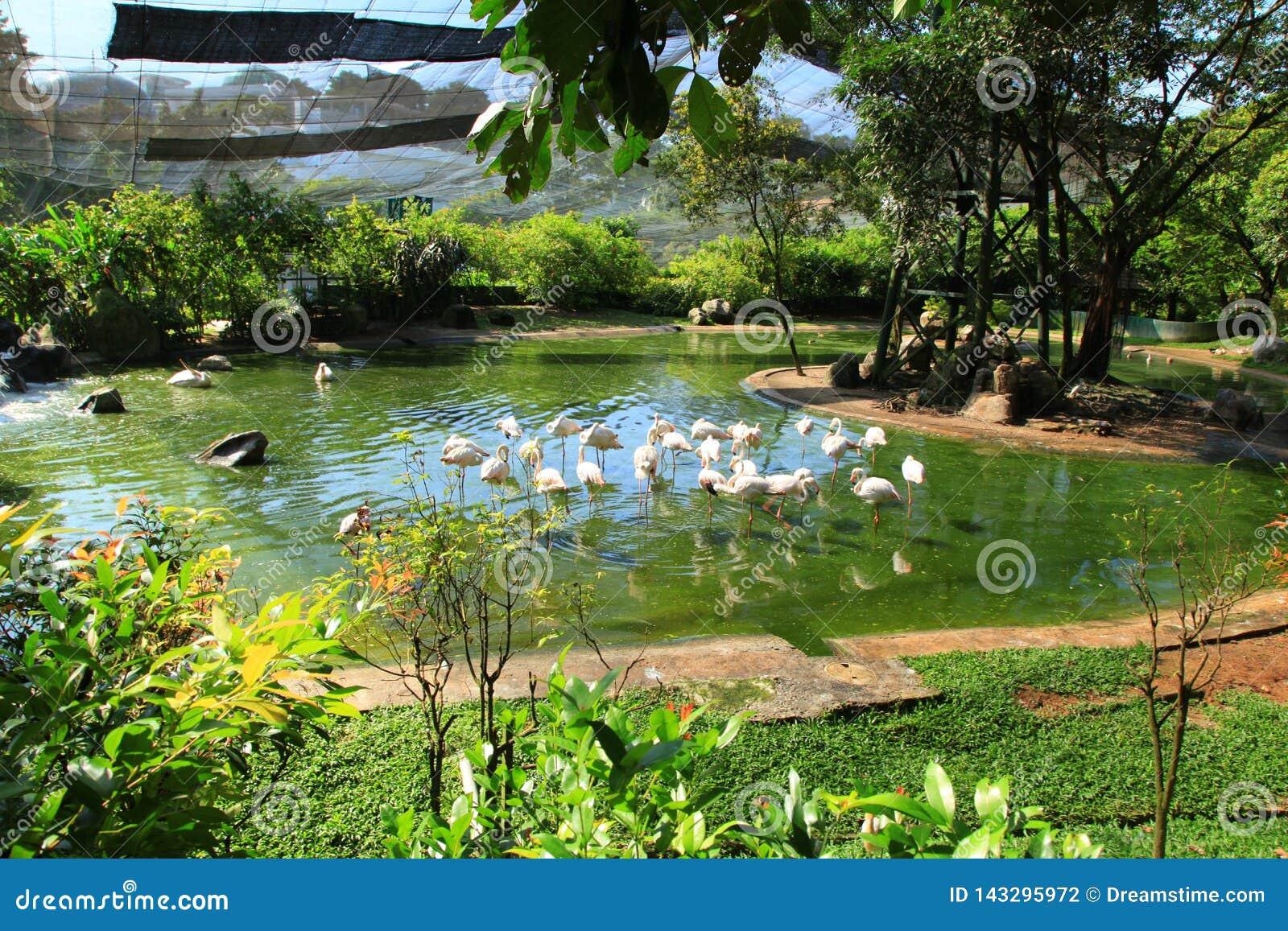 En flock av flamingo på en grön sjö som omges av träd och gräs