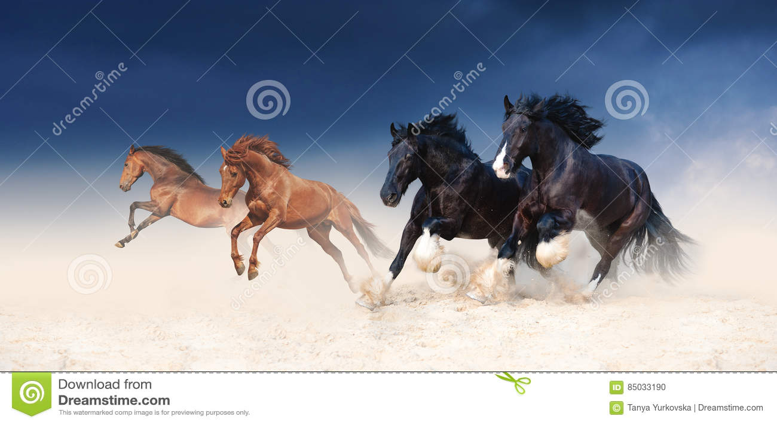 En flock av svarta och röda hästar som galopperar i sanden mot bakgrunden av en stormig himmel