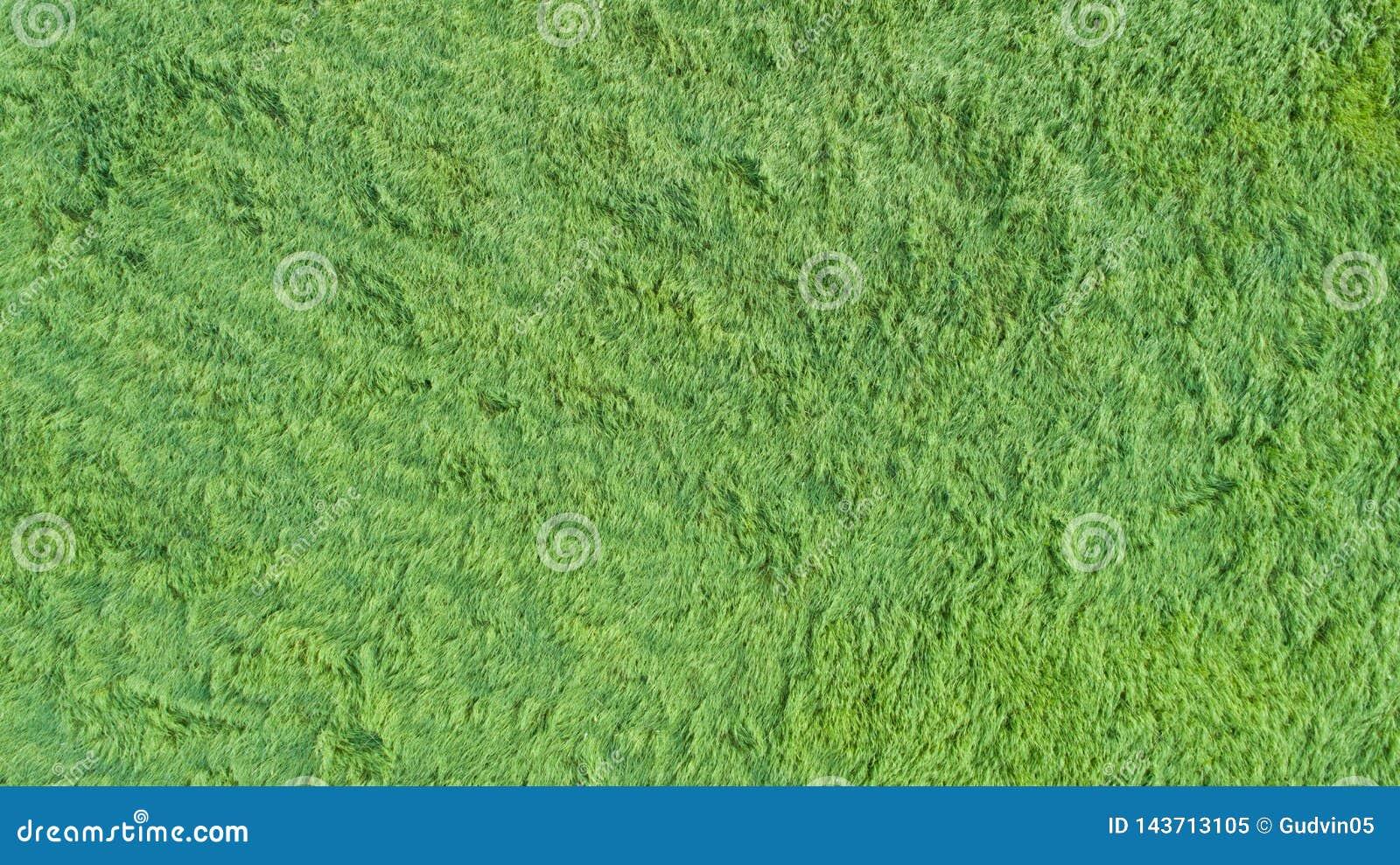 En flyg- sikt av en stor lapp av något nytt klippt, sunt grönt gräs
