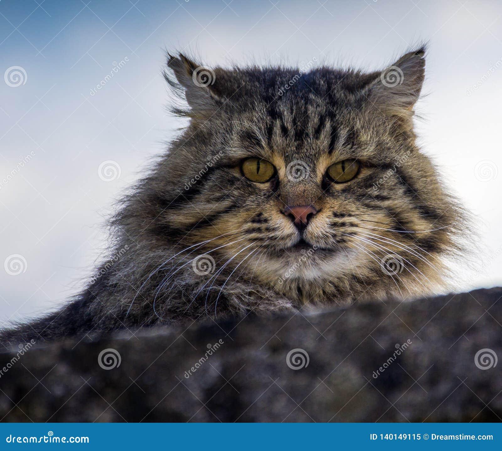 En grå katt som överst kikar från en grå vägg
