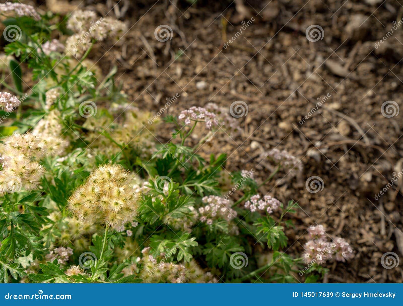 En grön blommakombination i en trädgård