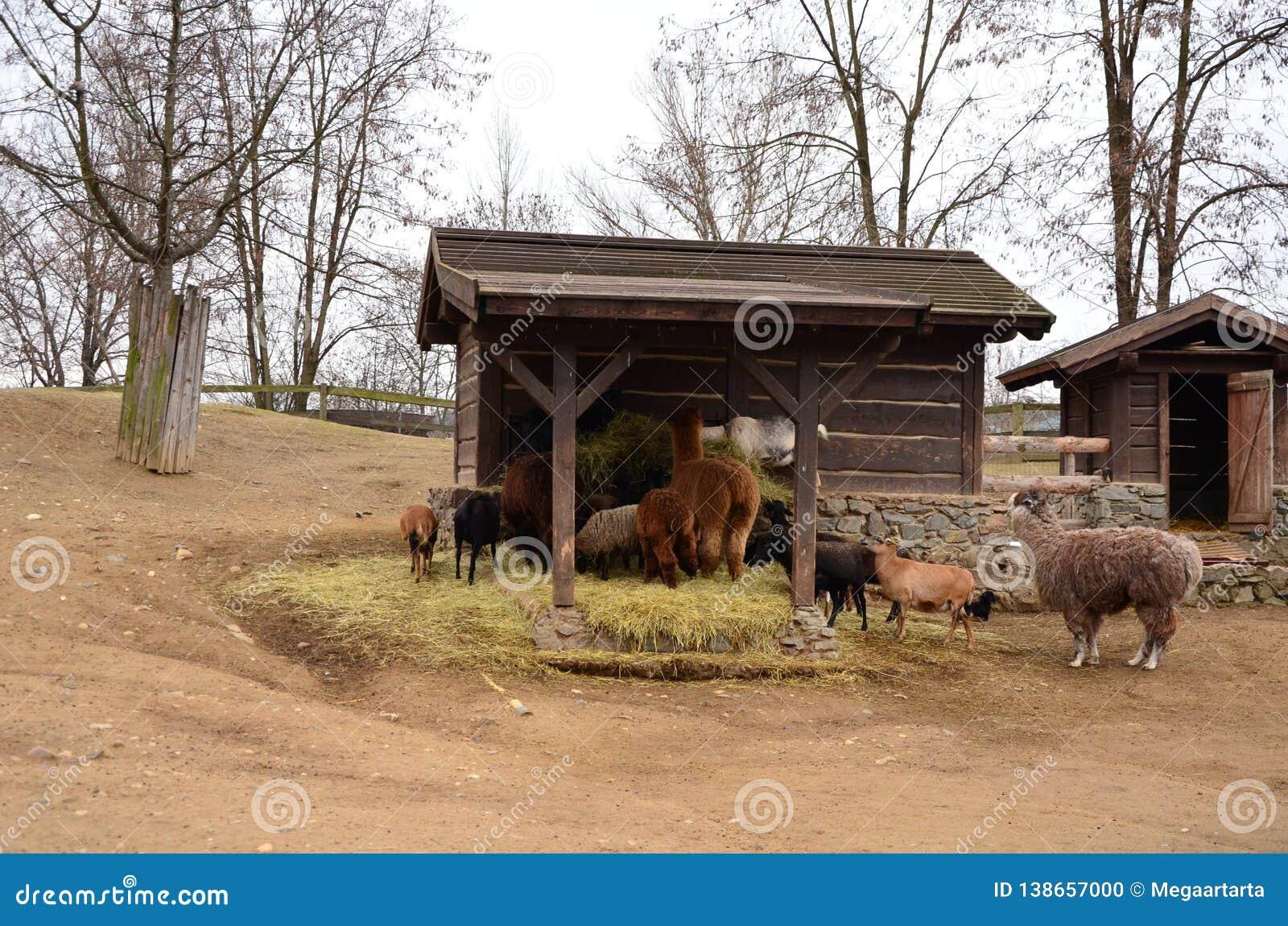 En grupp av lantgårddjur