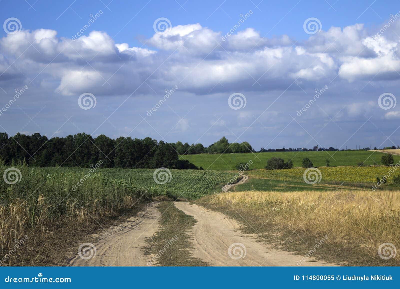 En grusväg i ett fält bland det mogna vetet, solrosorna och havren