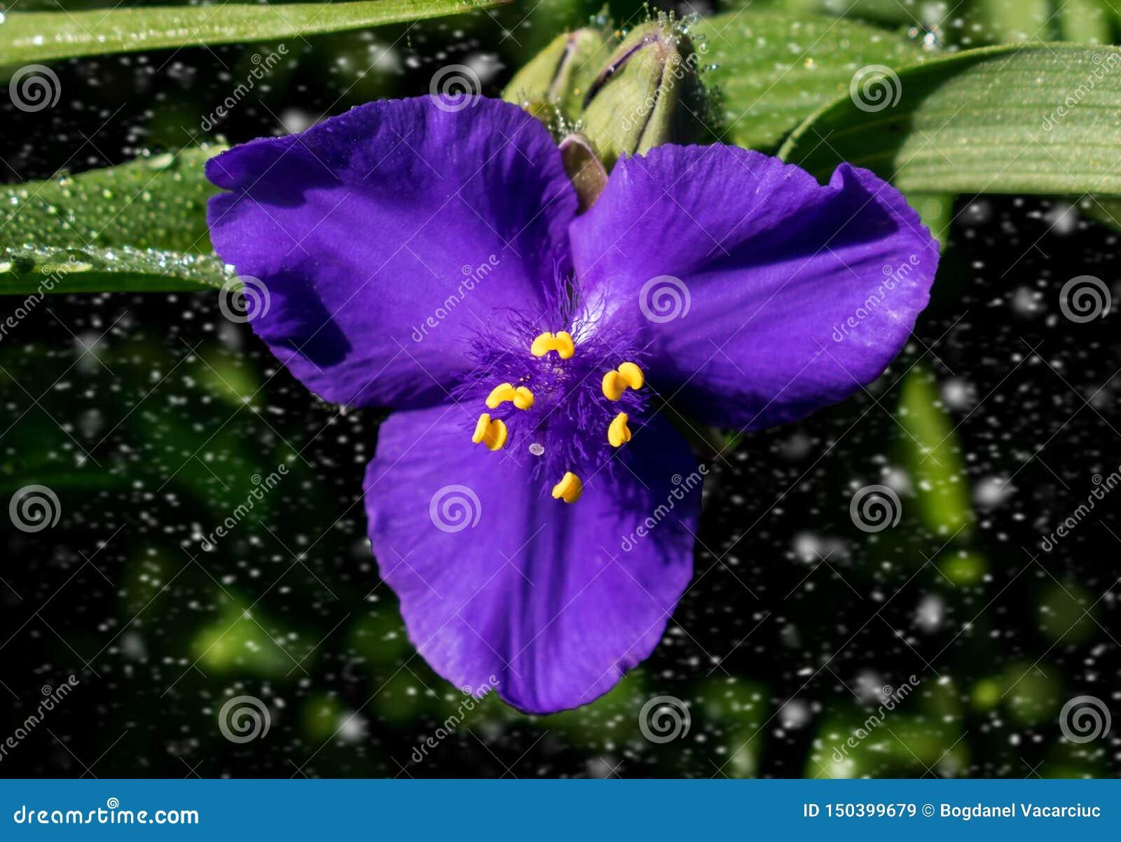 En härlig blå blomma, partikelinflyttning bakgrunden