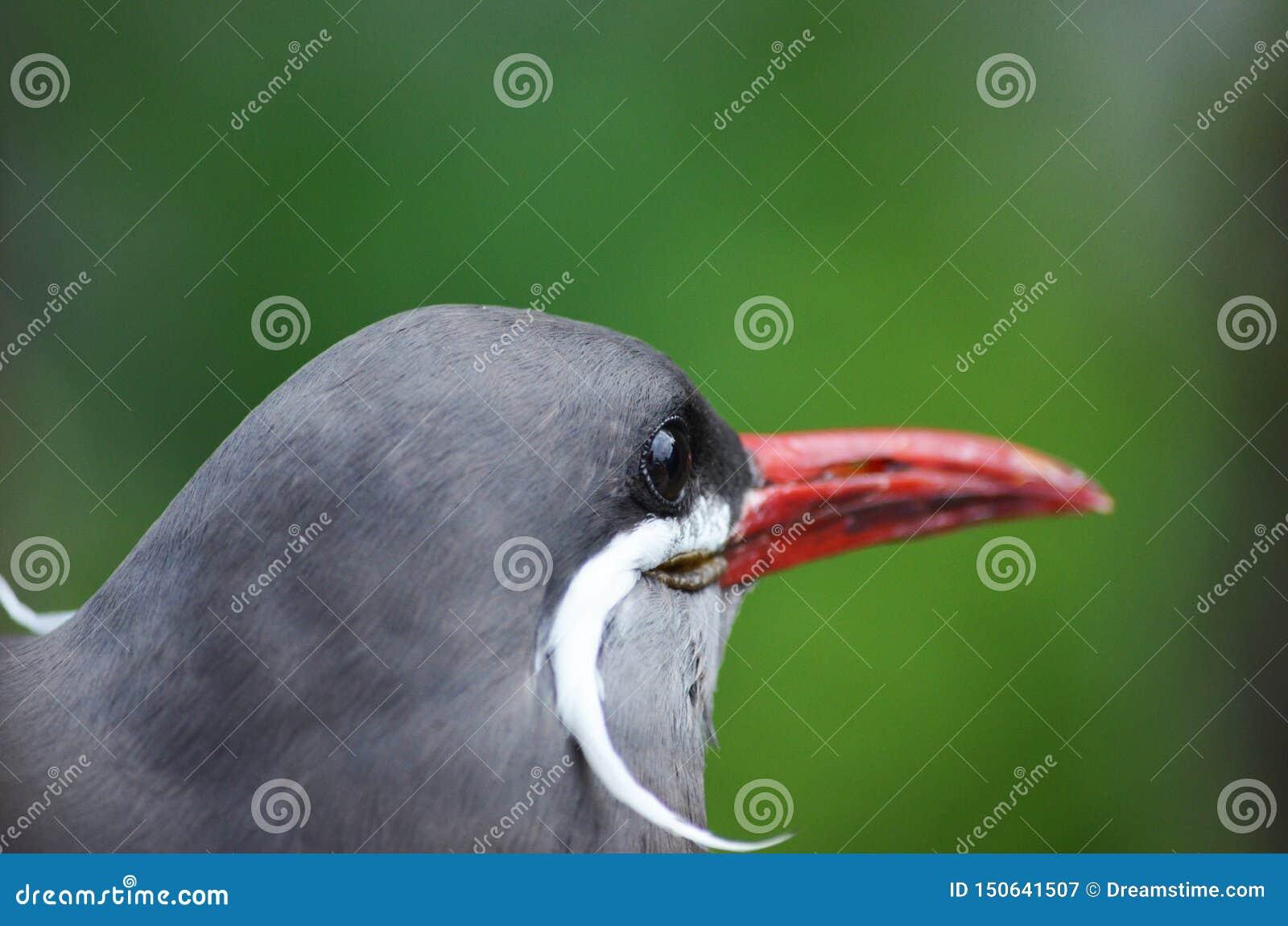 En härlig fågel i naturen