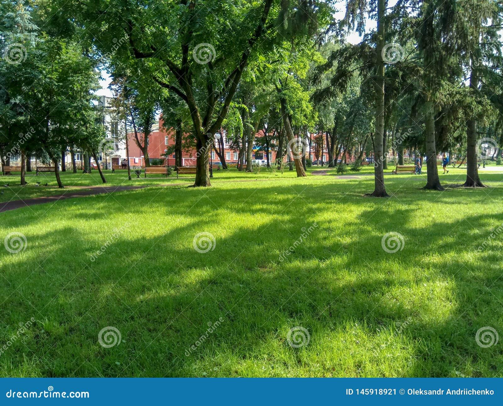En härlig gräsplan parkerar med grönt gräs och träd