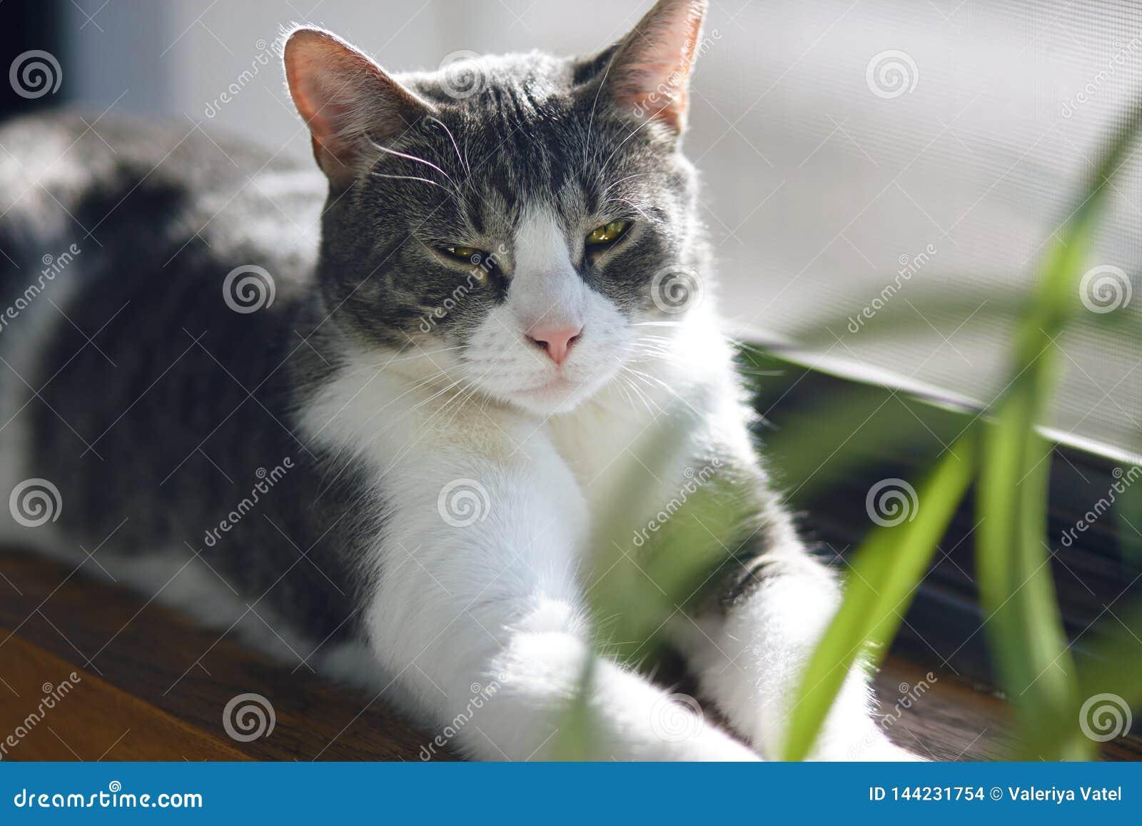 En härlig randig grå katt ligger på fönsterbrädan