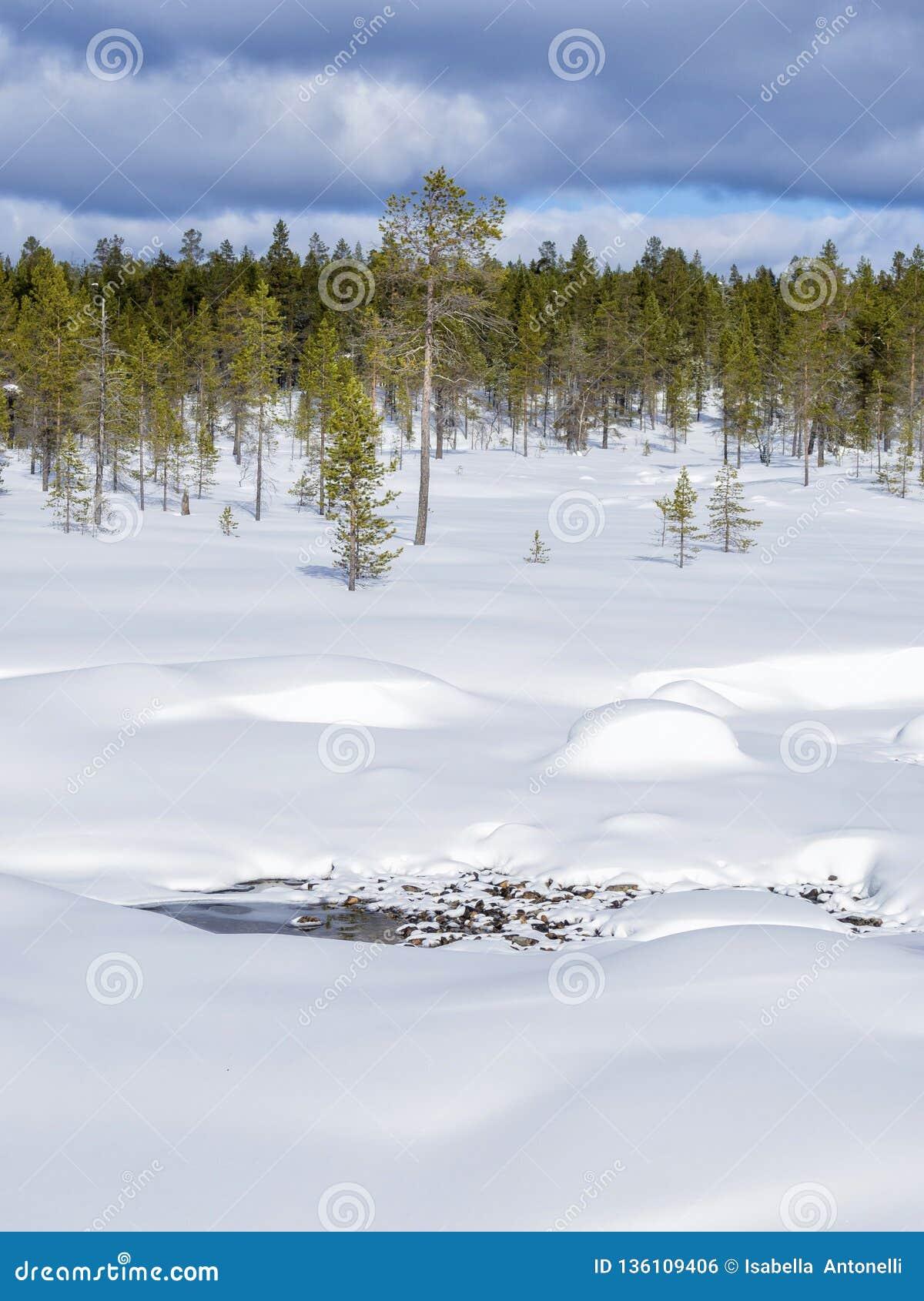 En härlig vinterskog som täckas av insnöade Finland