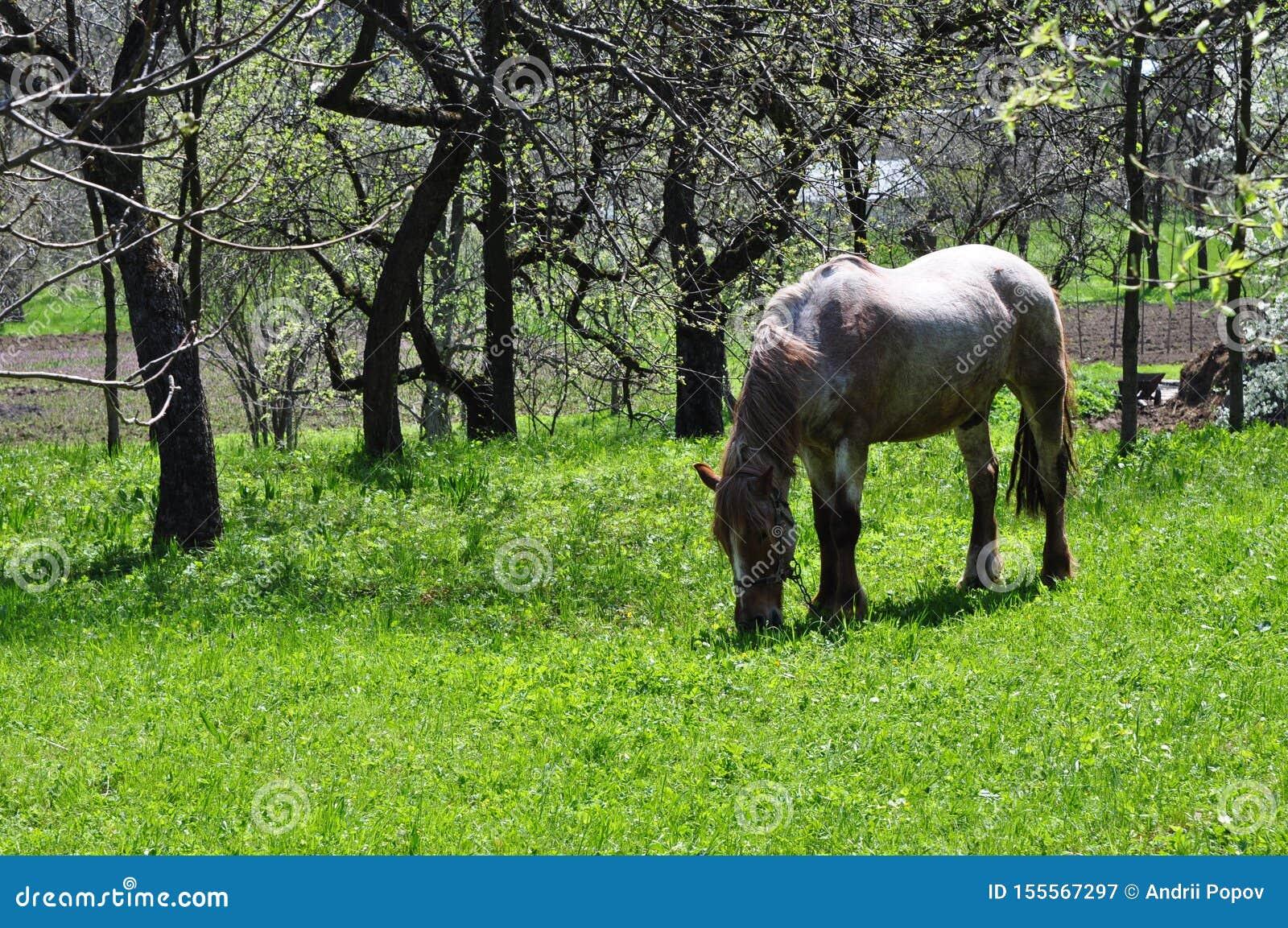 En häst äter grönt saftigt gräs mot bakgrunden av kala träd