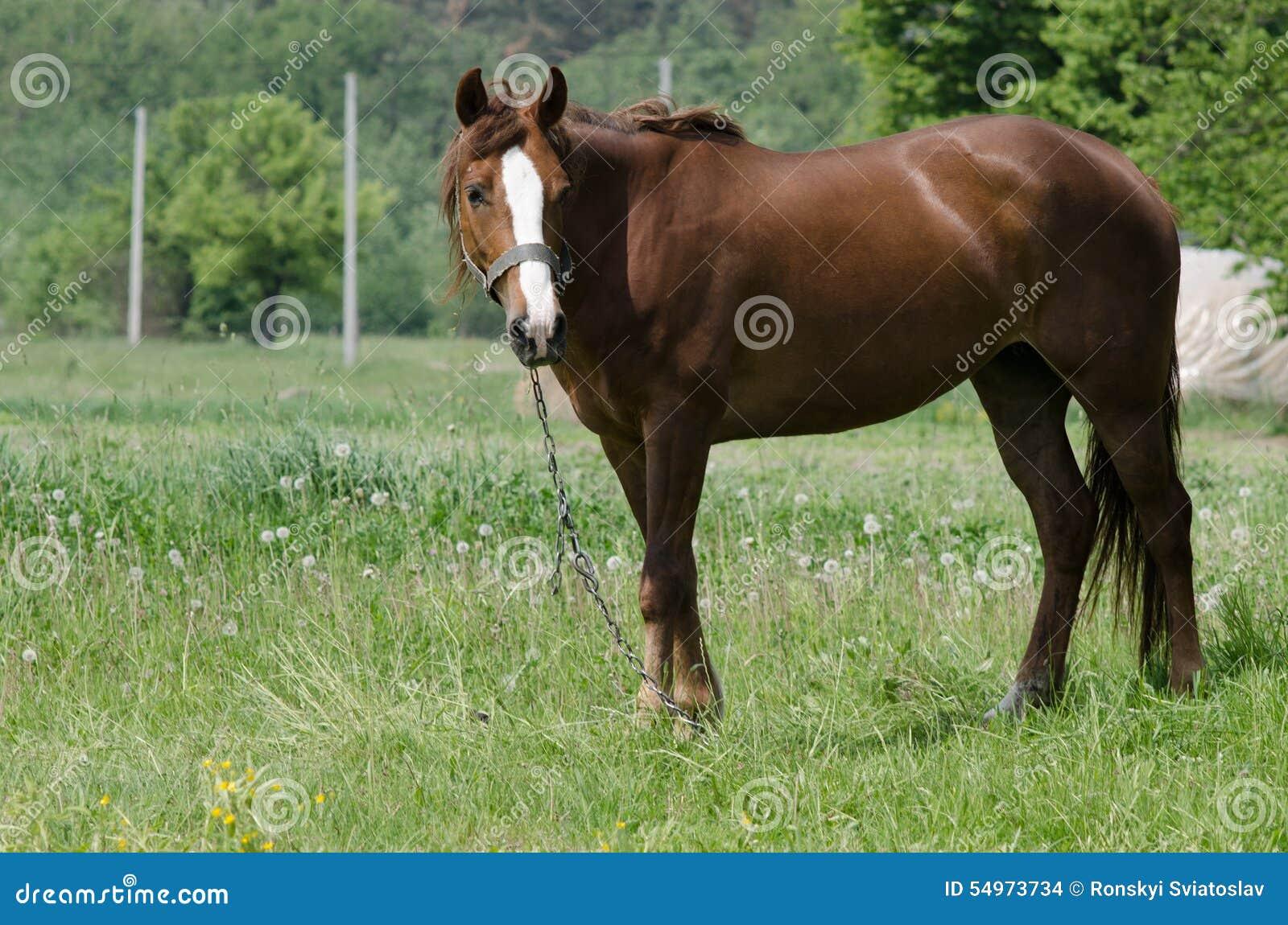En häst betar