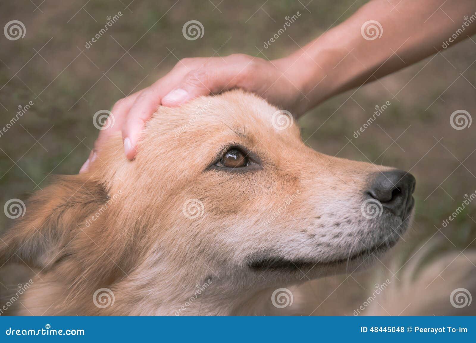 En hand daltar hunden hade, filtrerad tappning