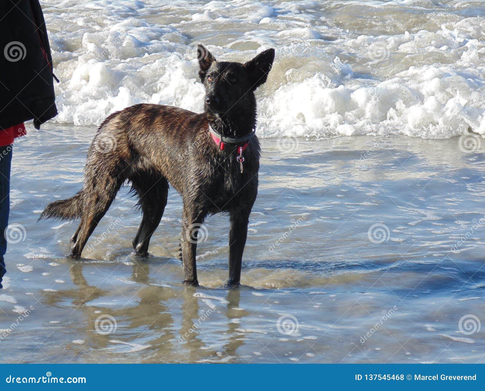 En hund i vågorna
