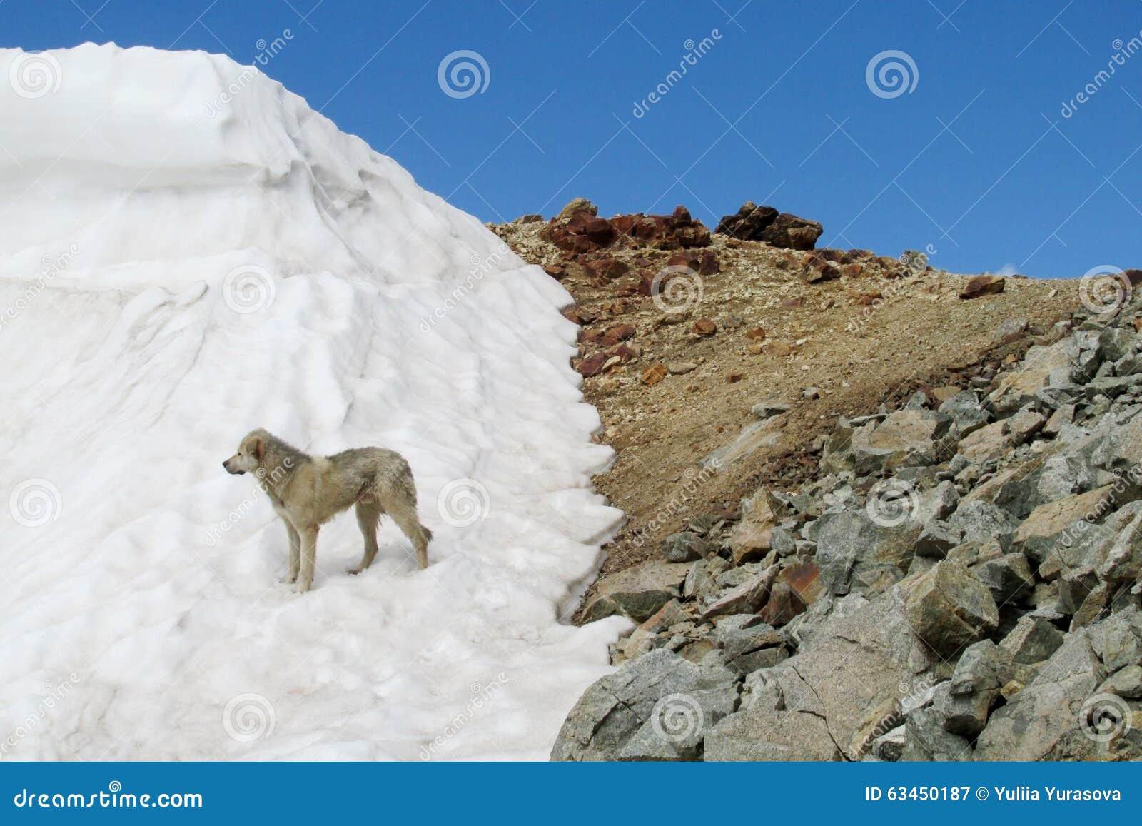 En hund på snö och stenig bergskedja