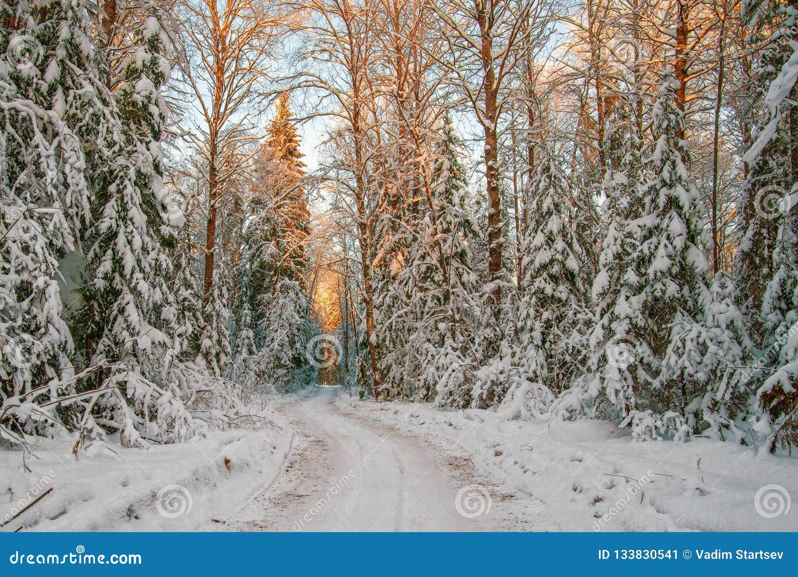 En isväg som passerar till och med en snöig skog på solnedgången januari Rus
