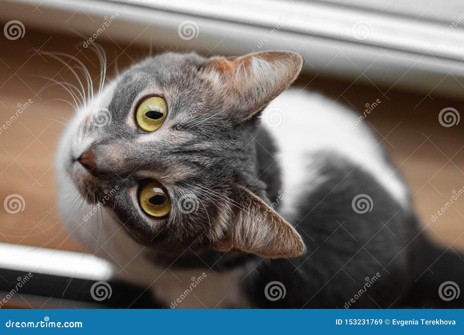 En katt sitter nära fönstret och ser nyfiket upp Top besk?dar