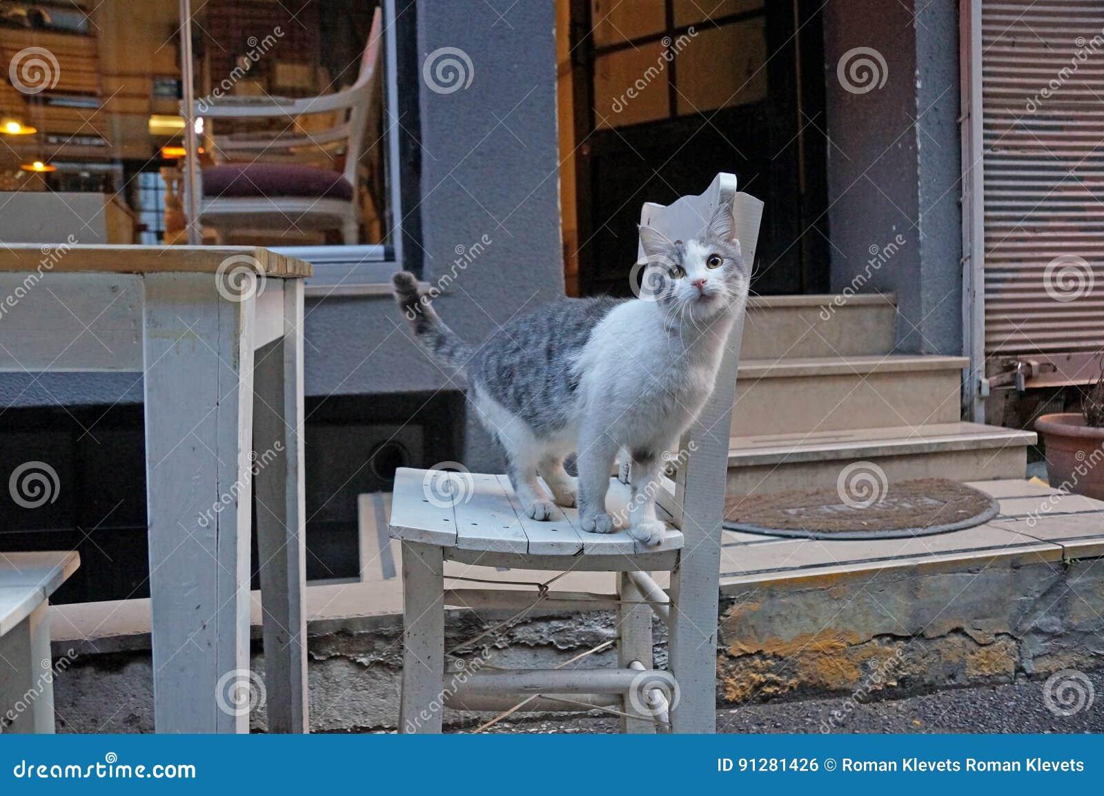 En katt spelar