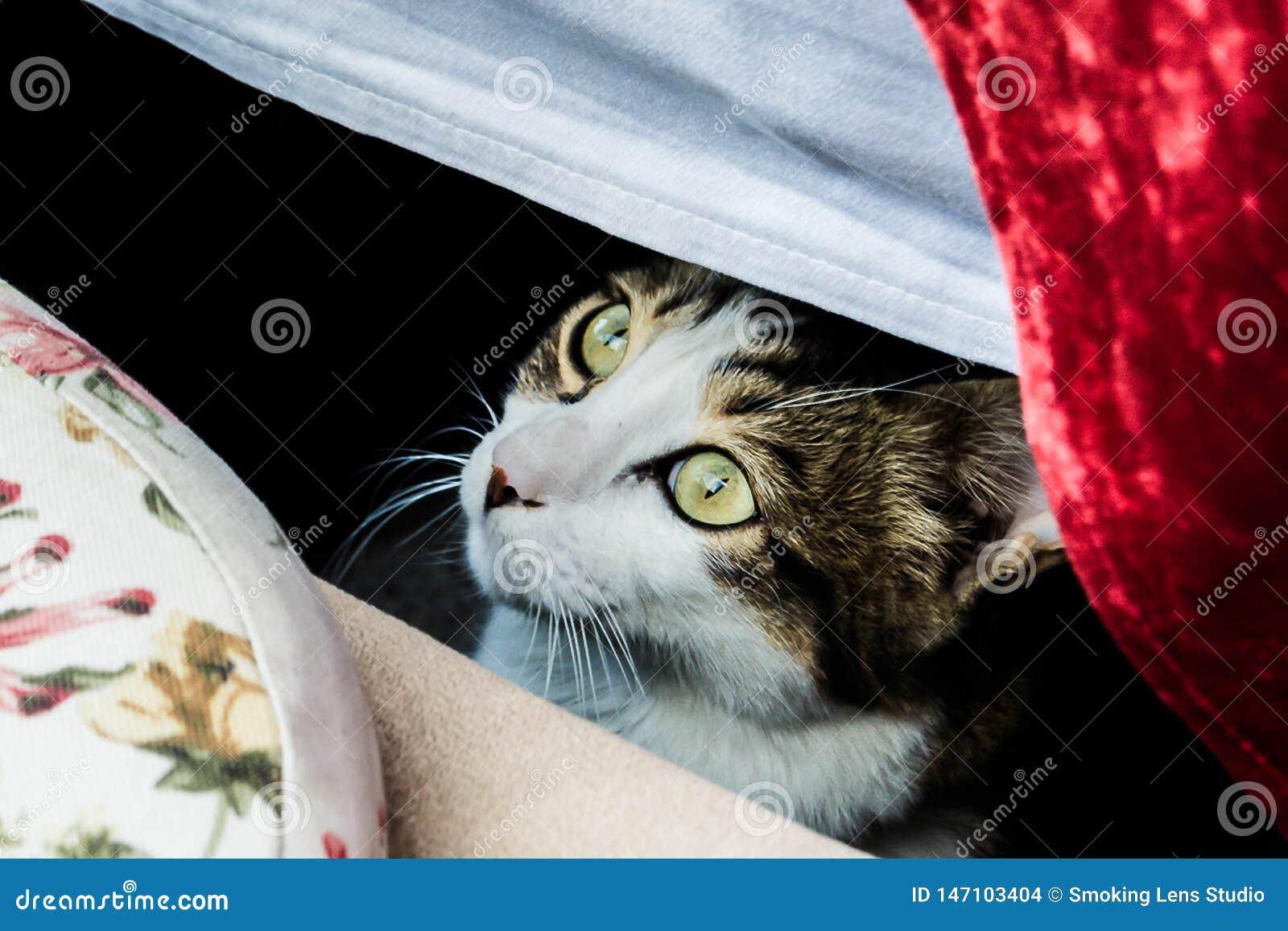 En katt stirrar under en tabell