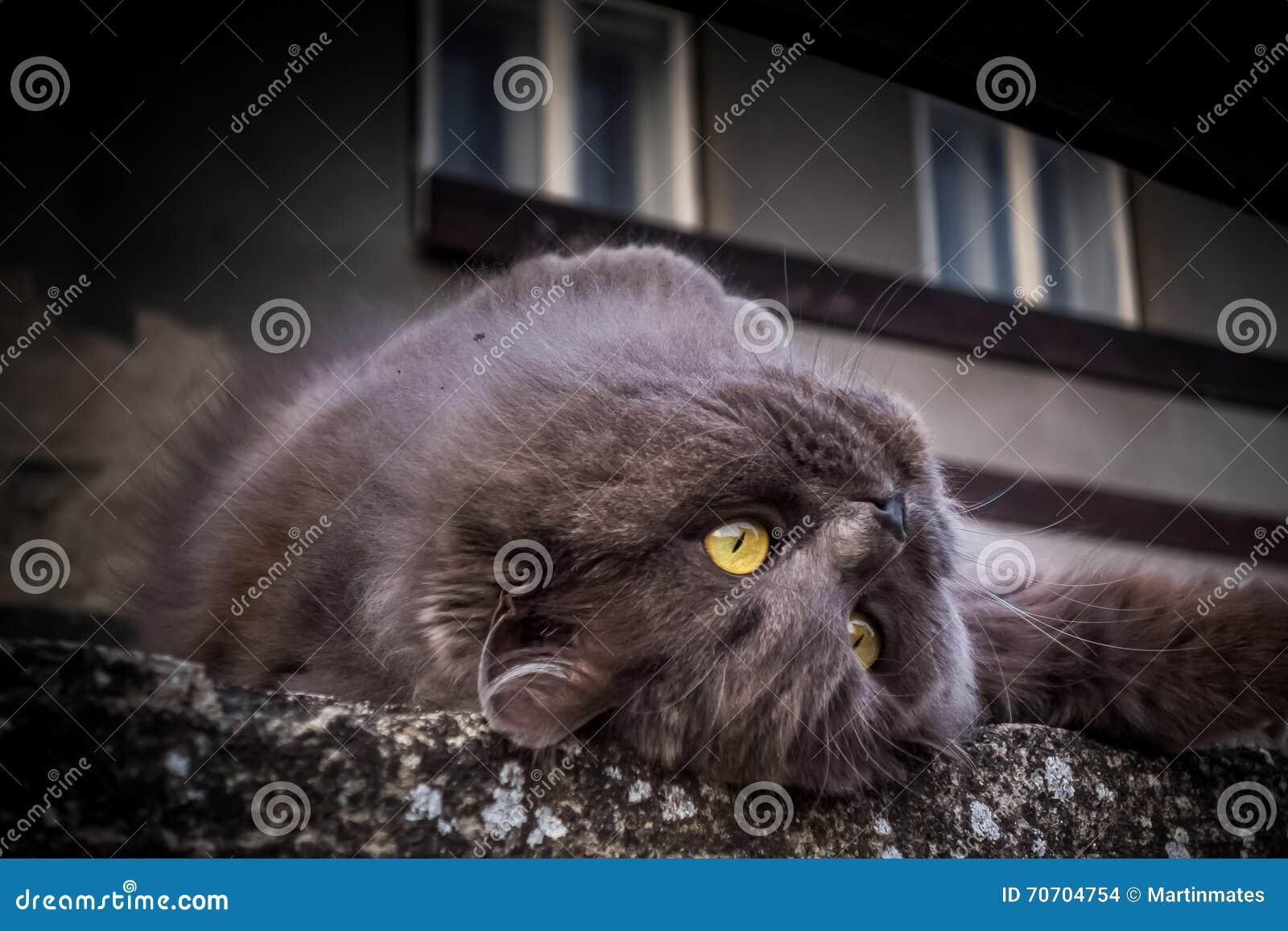 En kelig katt