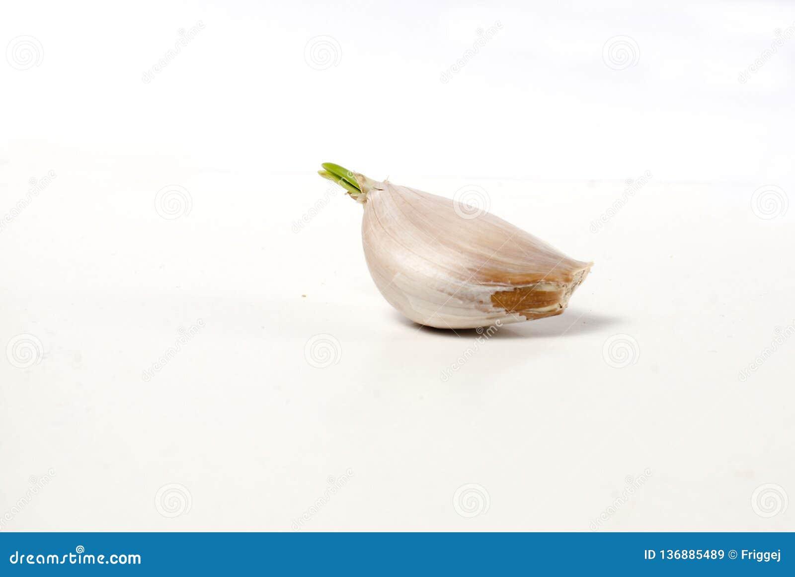 En kryddnejlika av vitlök med grodden