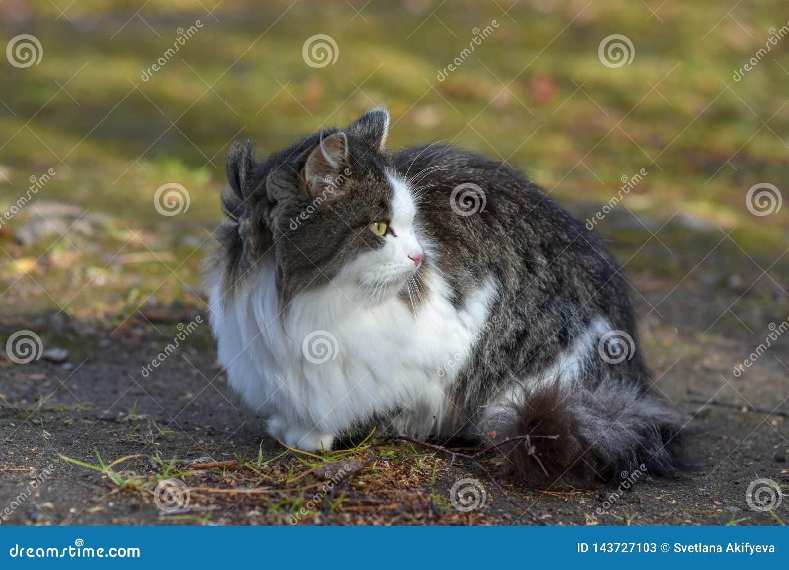 En la tierra el gato tiene comida y está mirando adelante a