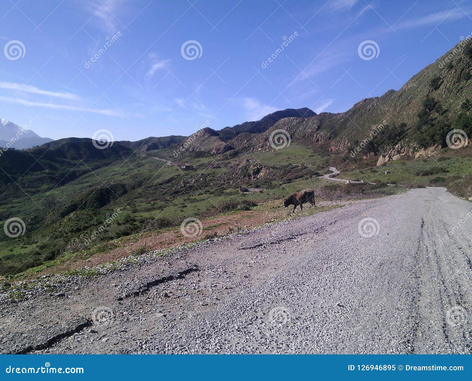 En las montañas el camino penetra las montañas