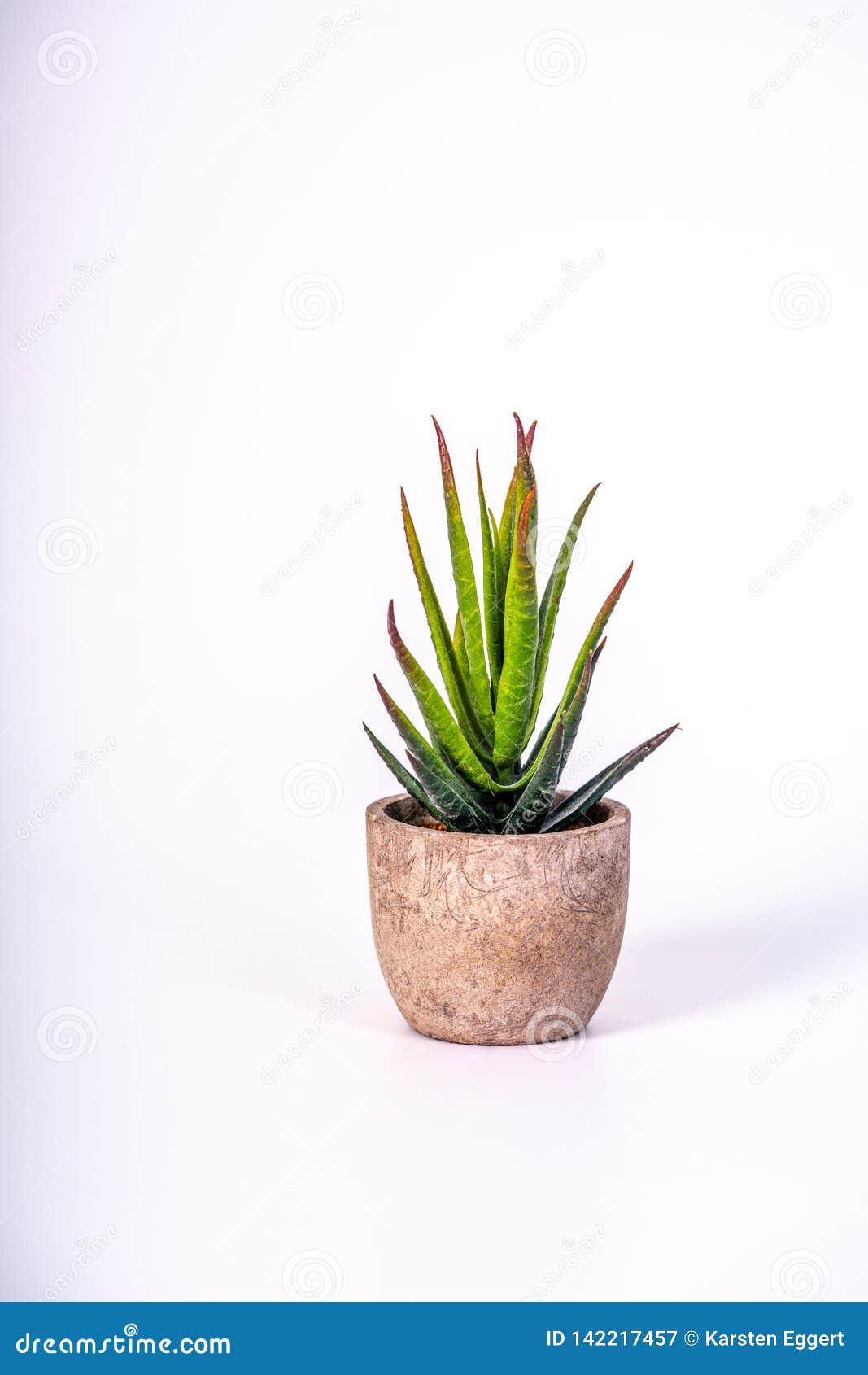 En liten ökenväxt i en blomkruka som göras av trä