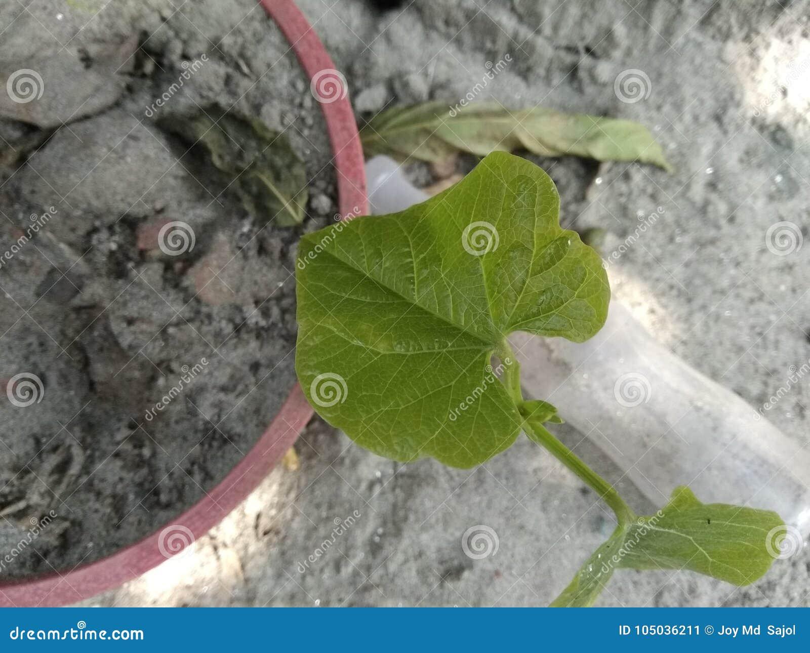 En liten trädväxt