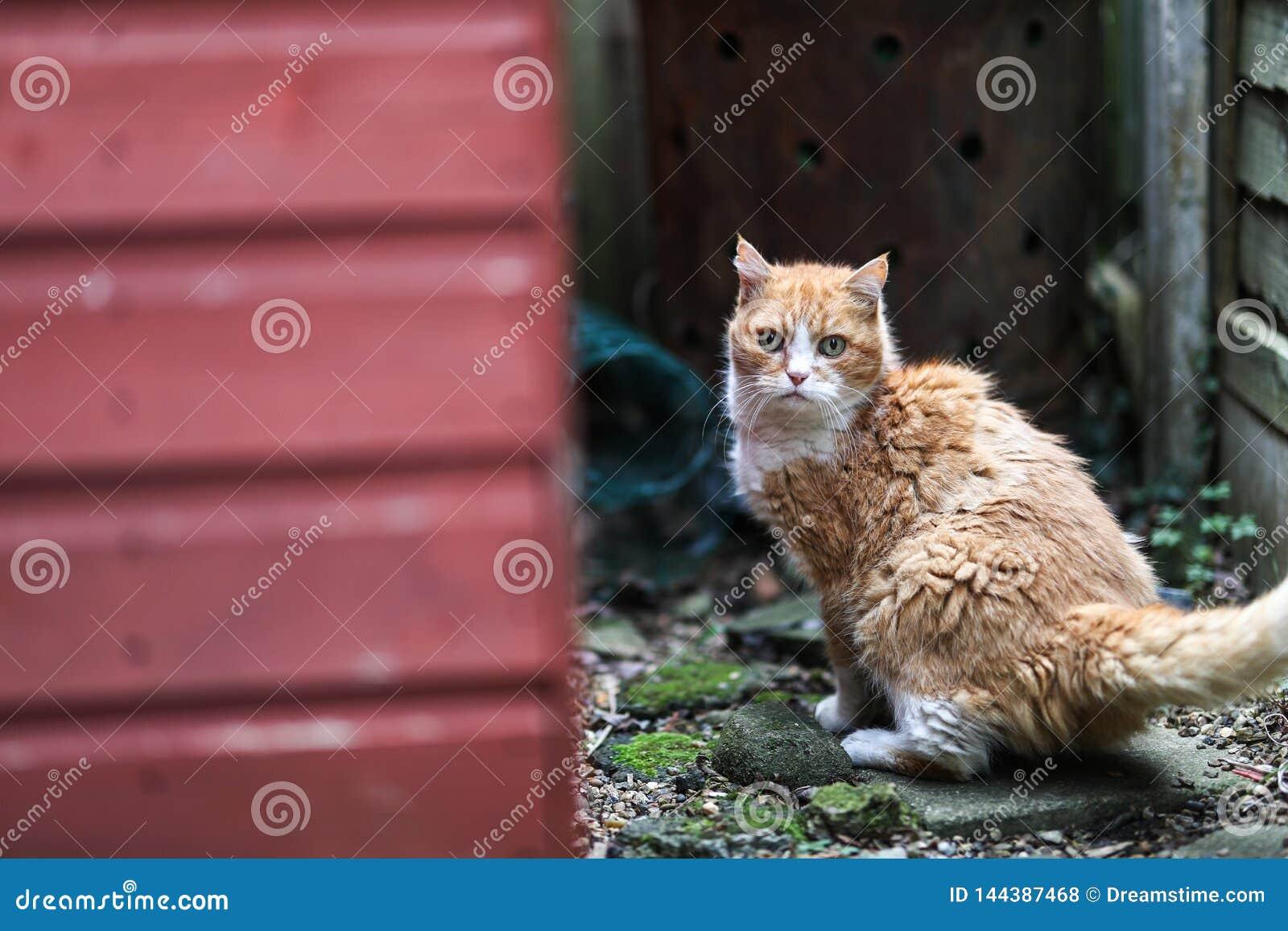 En ljust rödbrun katt som skrämmas ner en bakgata på London