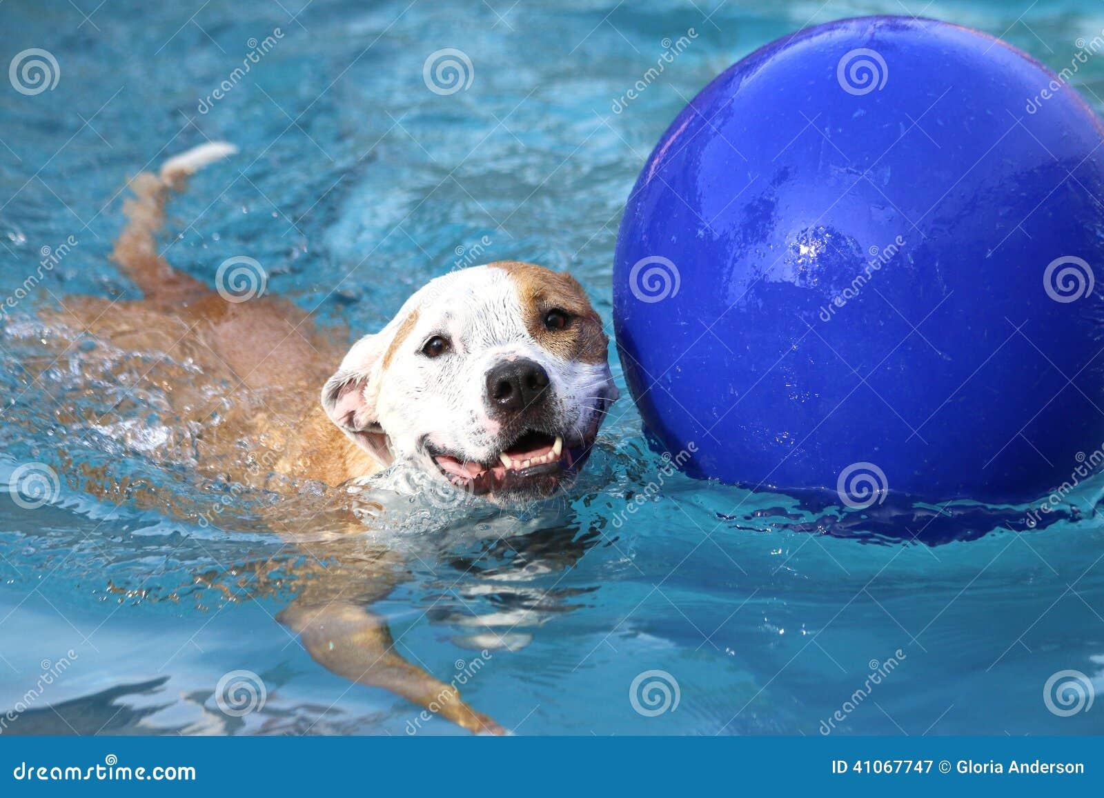 En lycklig hundsimning