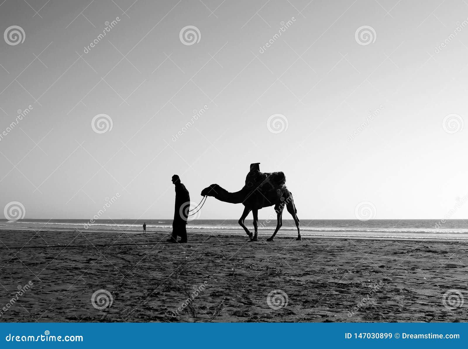 En man och en kamel