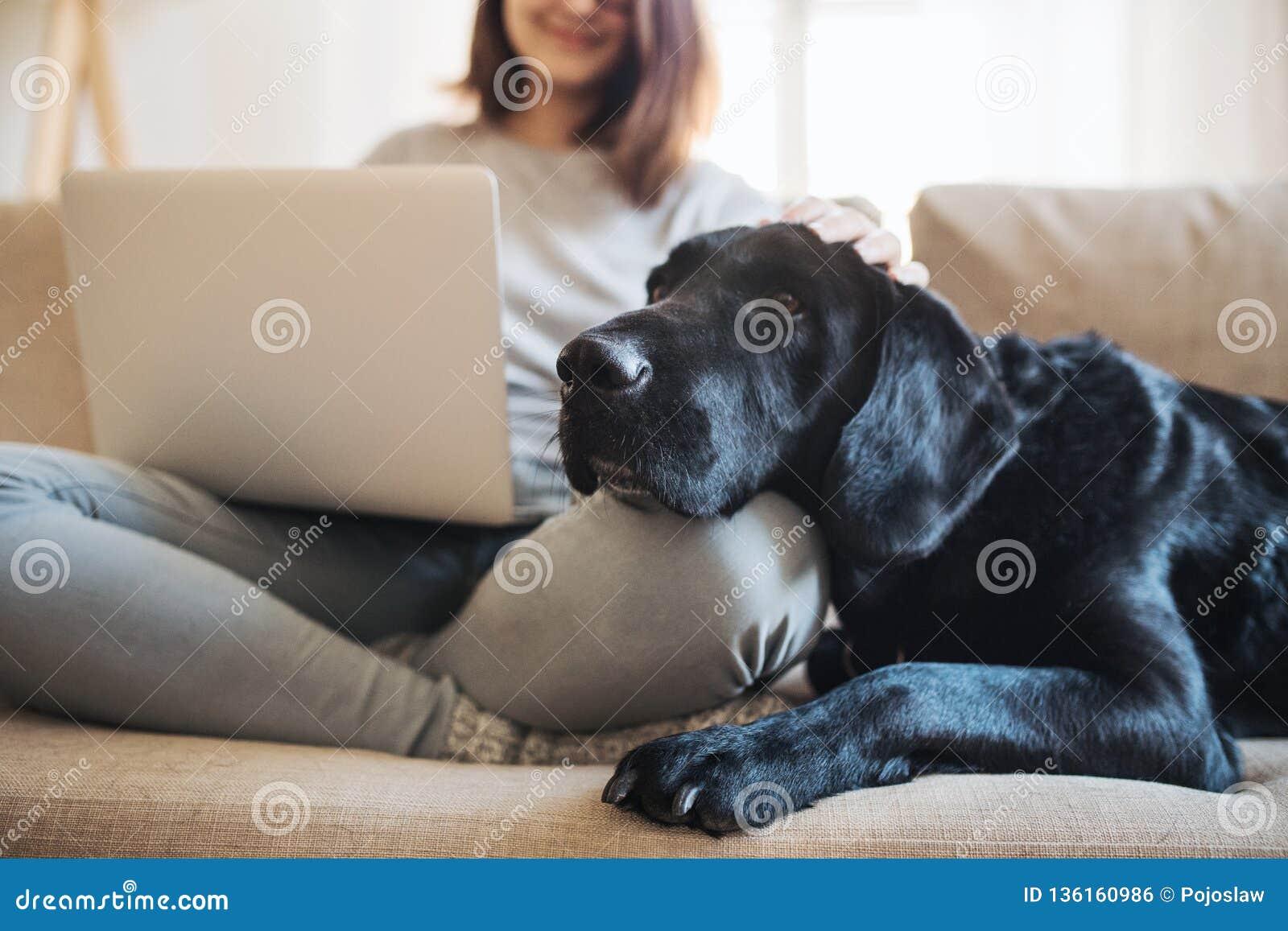 En midsection av den tonårs- flickan med en hund som inomhus som sitter på en soffa arbetar på en bärbar dator