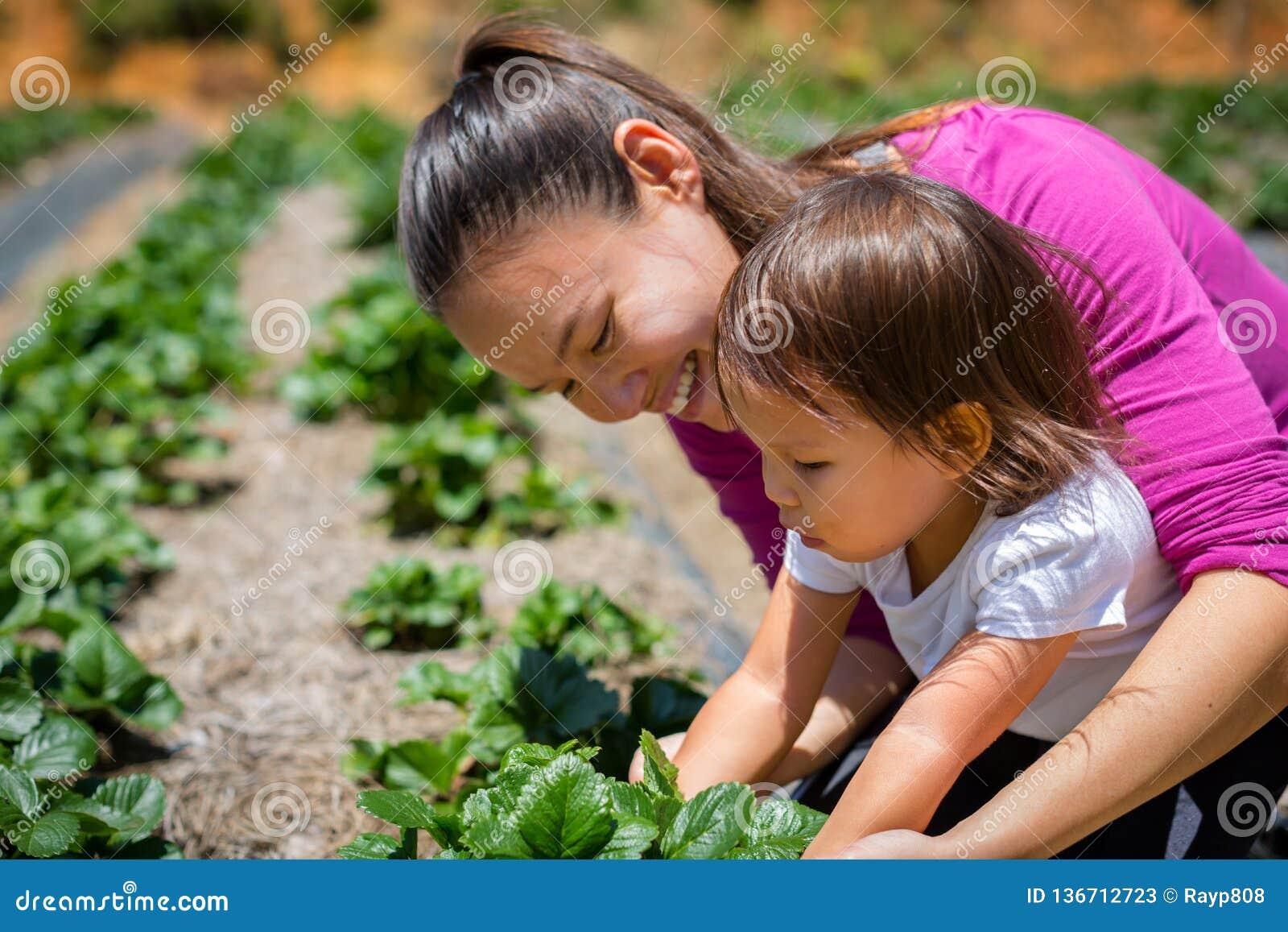 En moder som undervisar hennes barn hur man växer växter och veggies i en trädgård Lyfta och att bry sig för en organisk lantgård