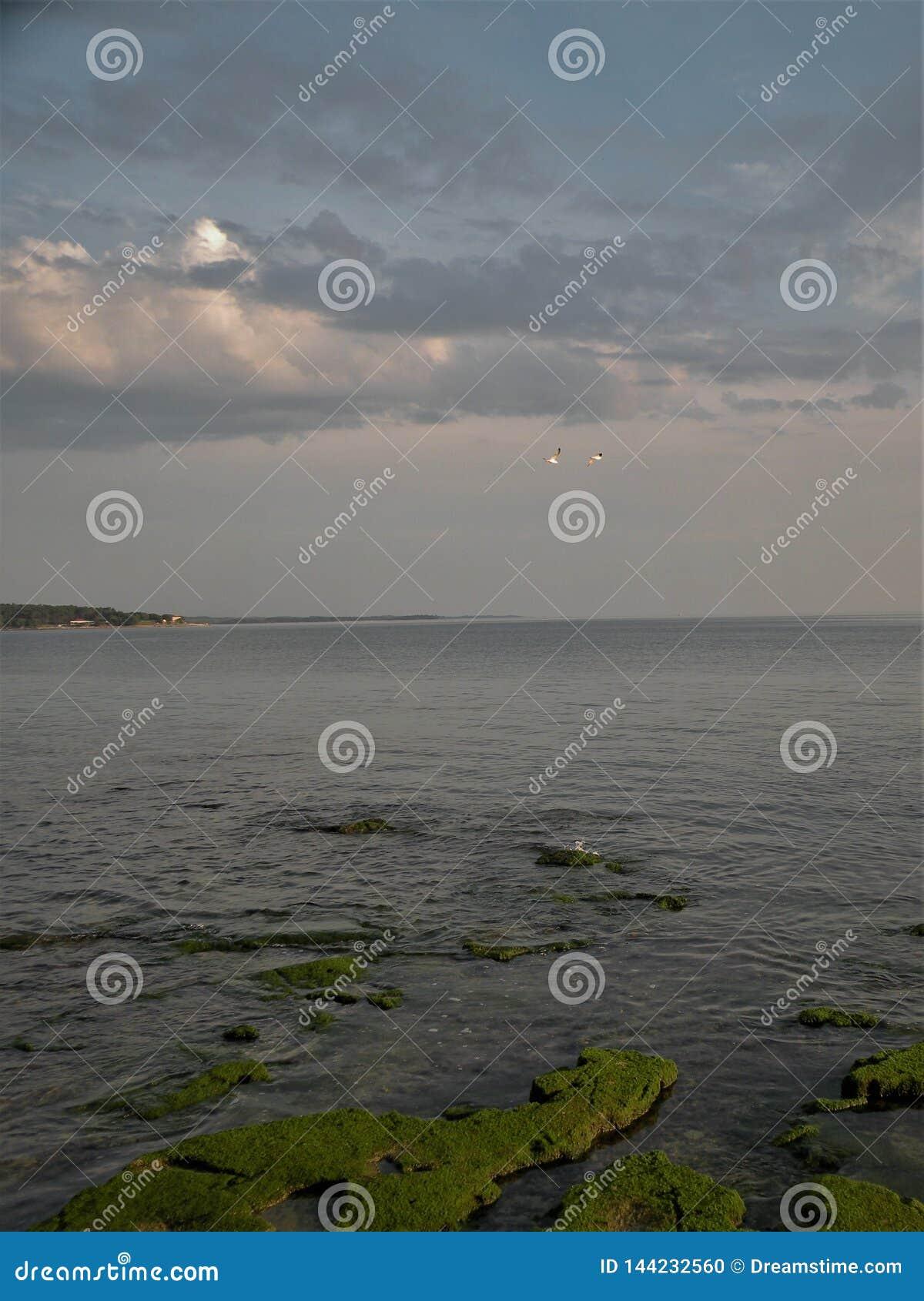 En musgo verde visti? rocas en el agua, que forma modelos interesantes