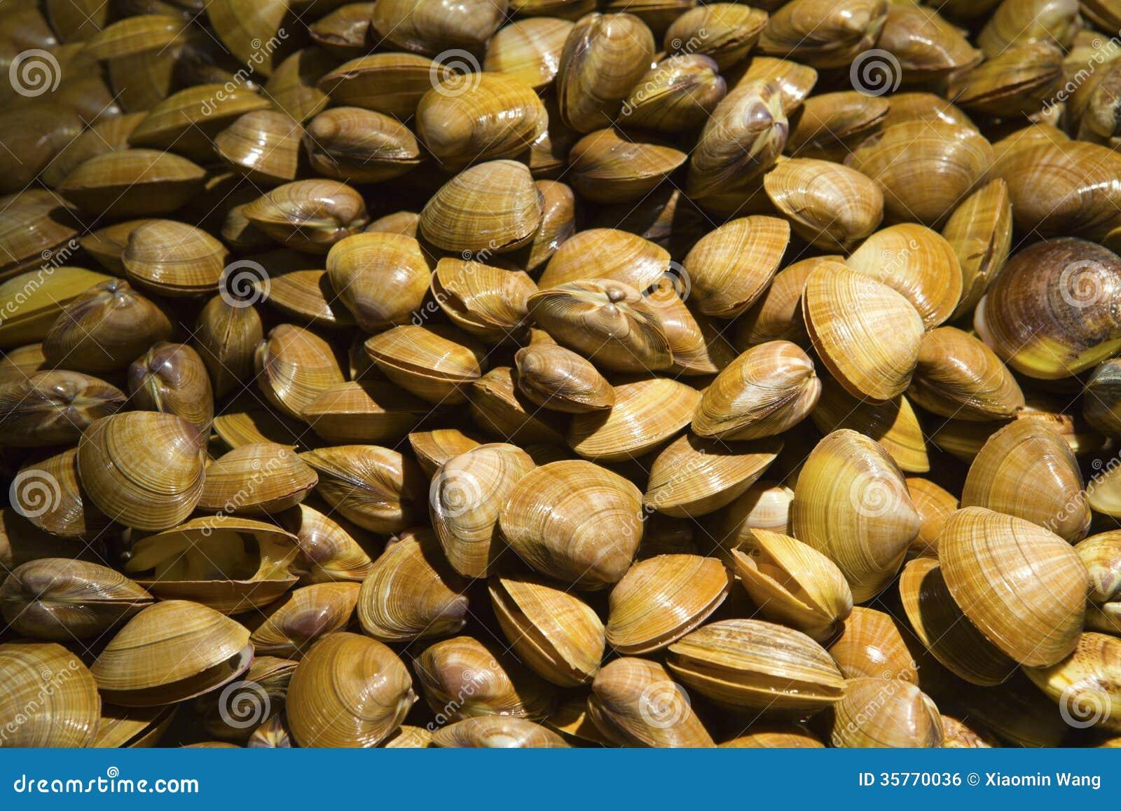 En mussla