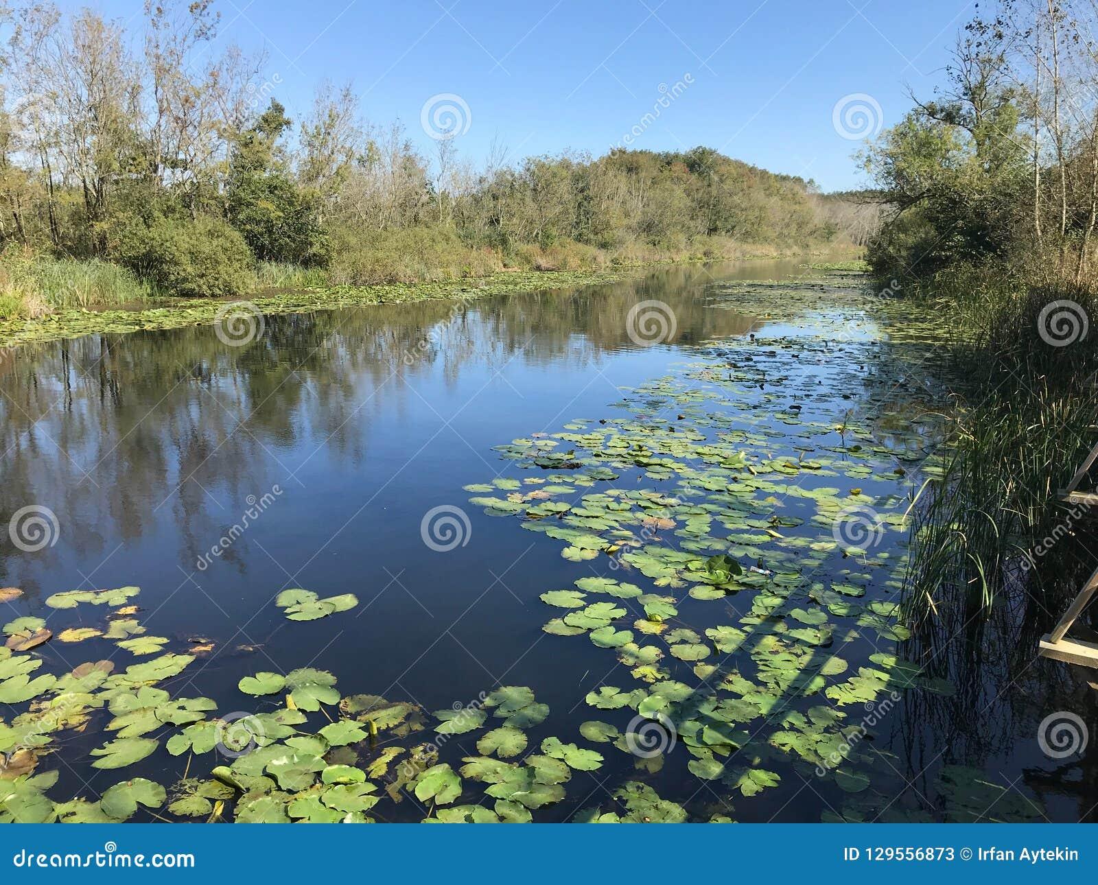 EN OCTUBRE DE 2018, el bosque de agua dulce en segundo lugar más grande del pantano de Turquía: Acarlar en Sakarya, Turquía