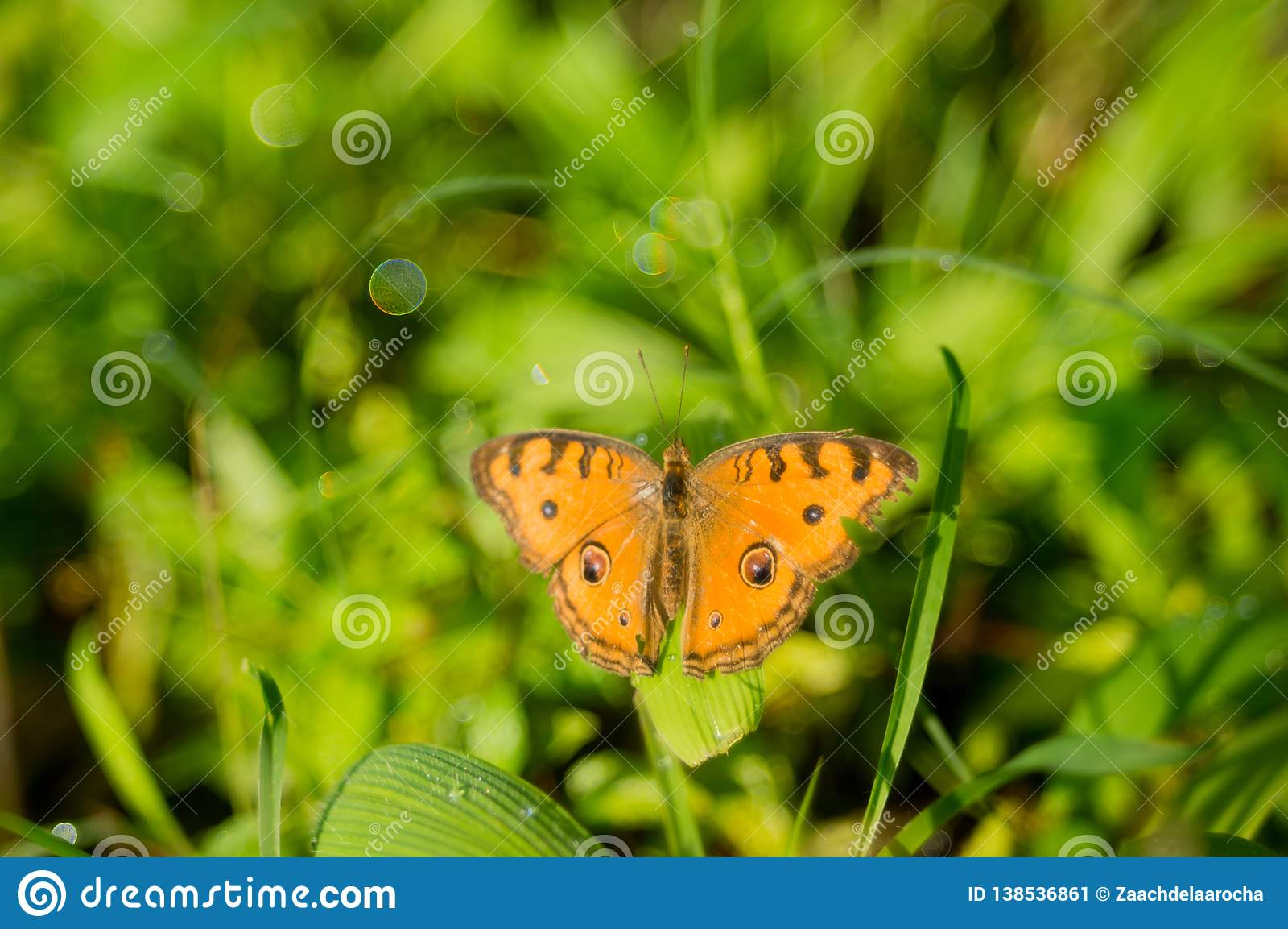 En orange fjäril med bubblabokeh