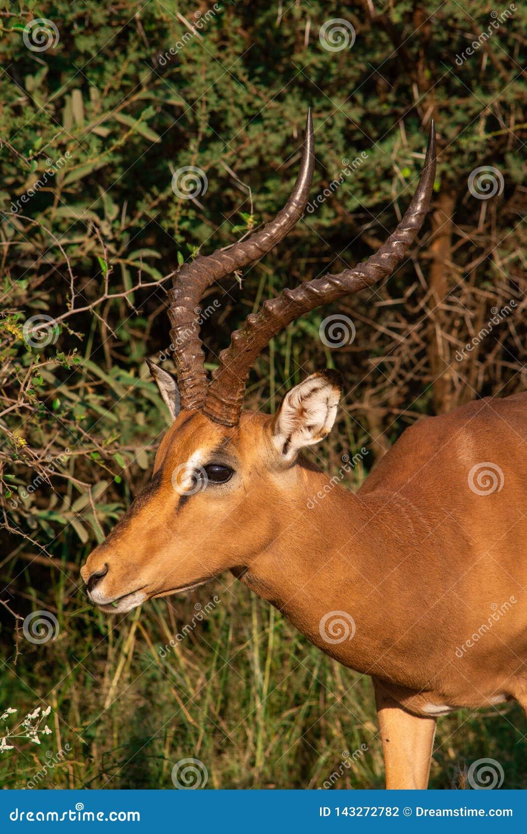 En profil för kuduRAMsida