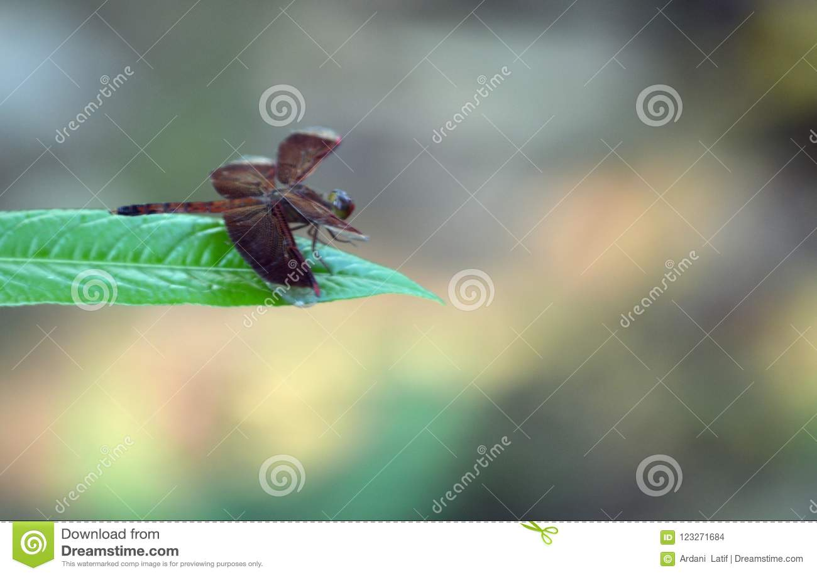 En röd drakefluga på det gröna bladet