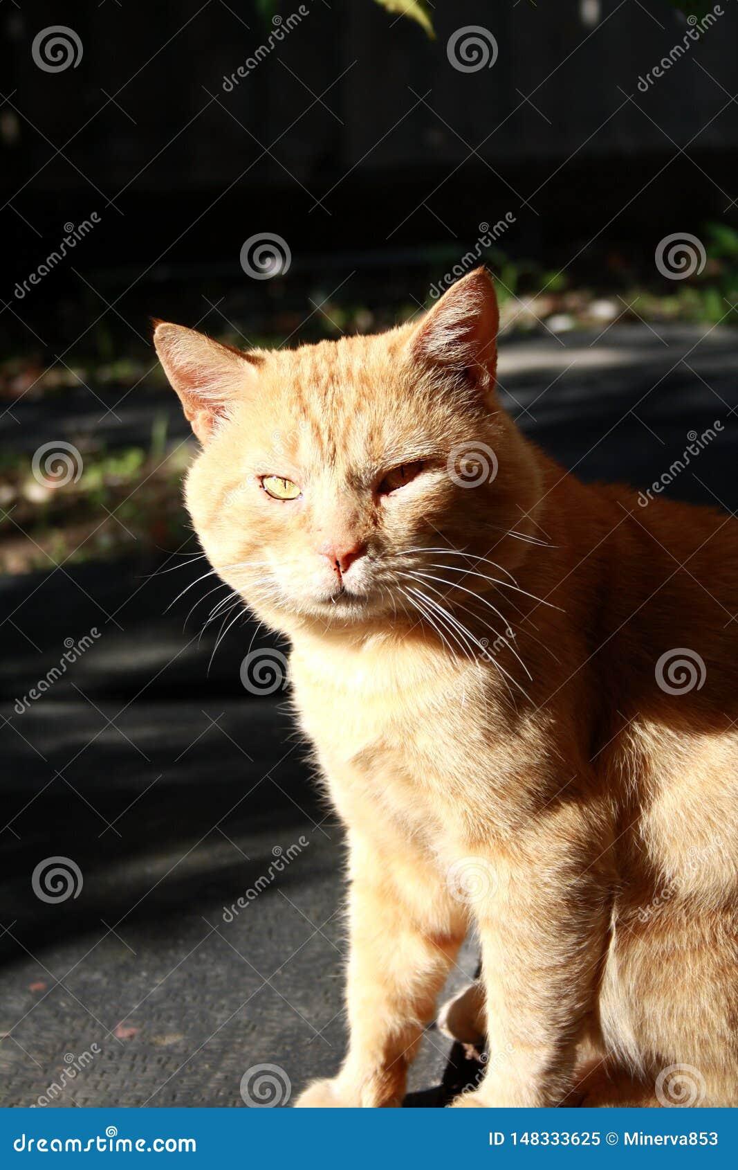 En rolig och ilsken röd katt En tillf?llig katt