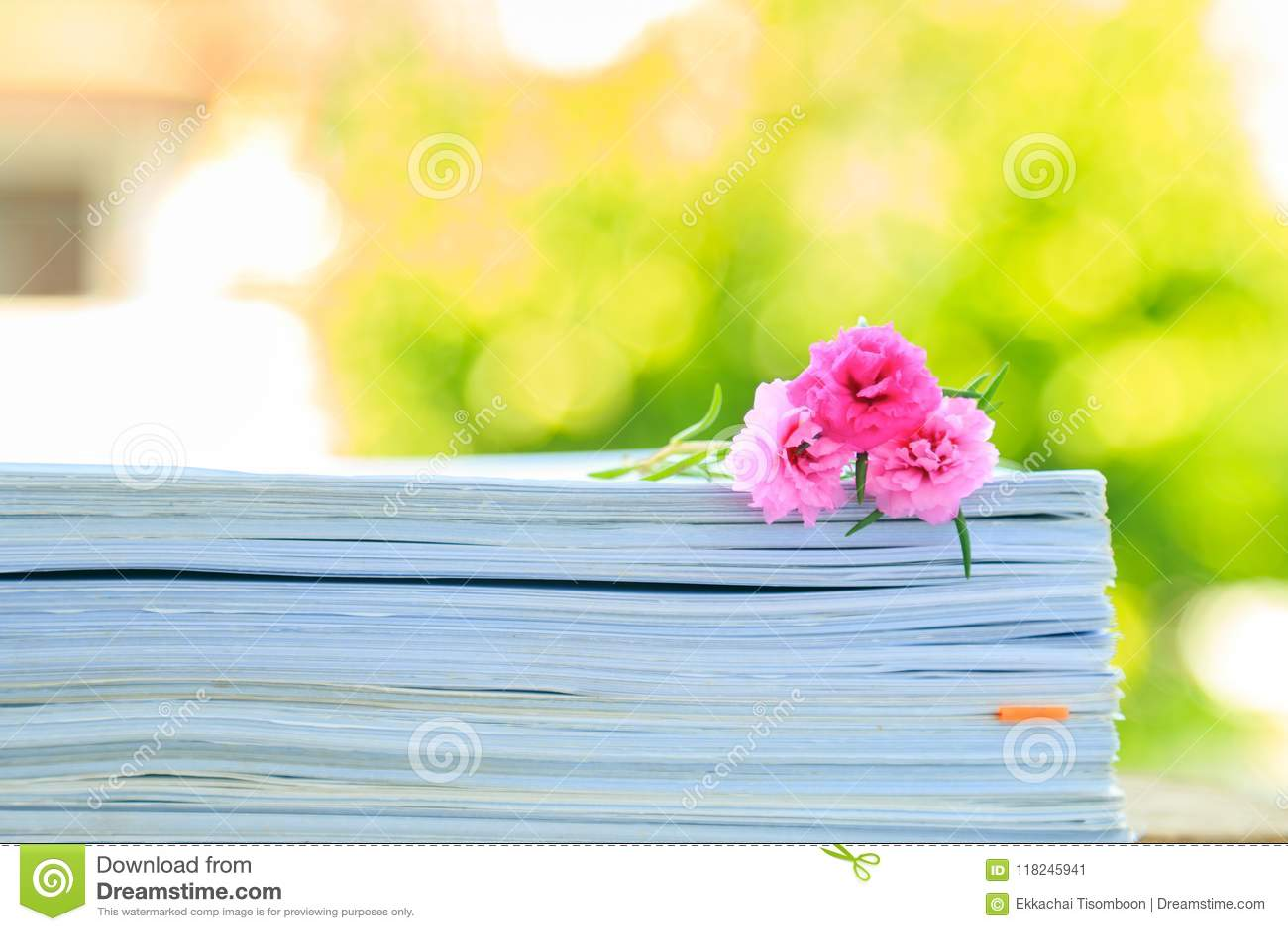 En rosa mossa steg på bunten av gamla pappers- dokument