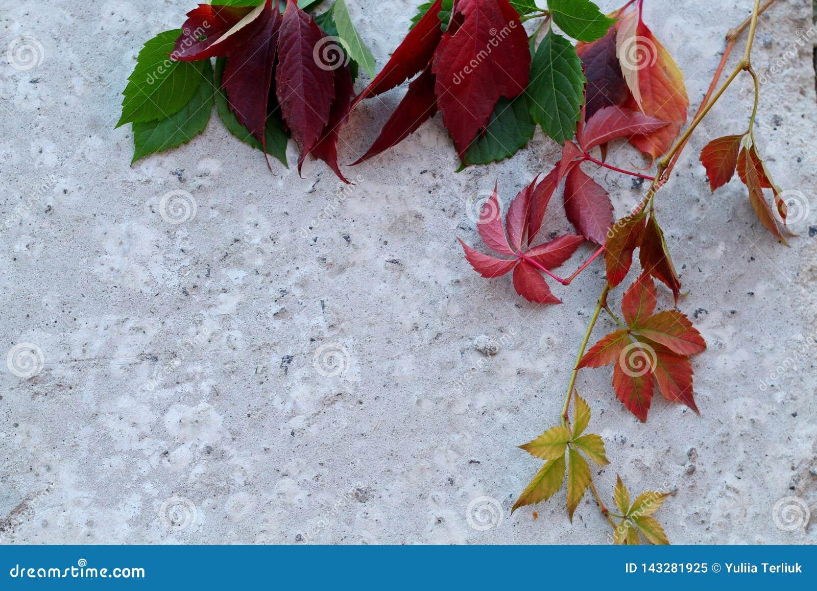 En samling av härliga färgrika höstsidor, ställde in på en grå bakgrund av betong